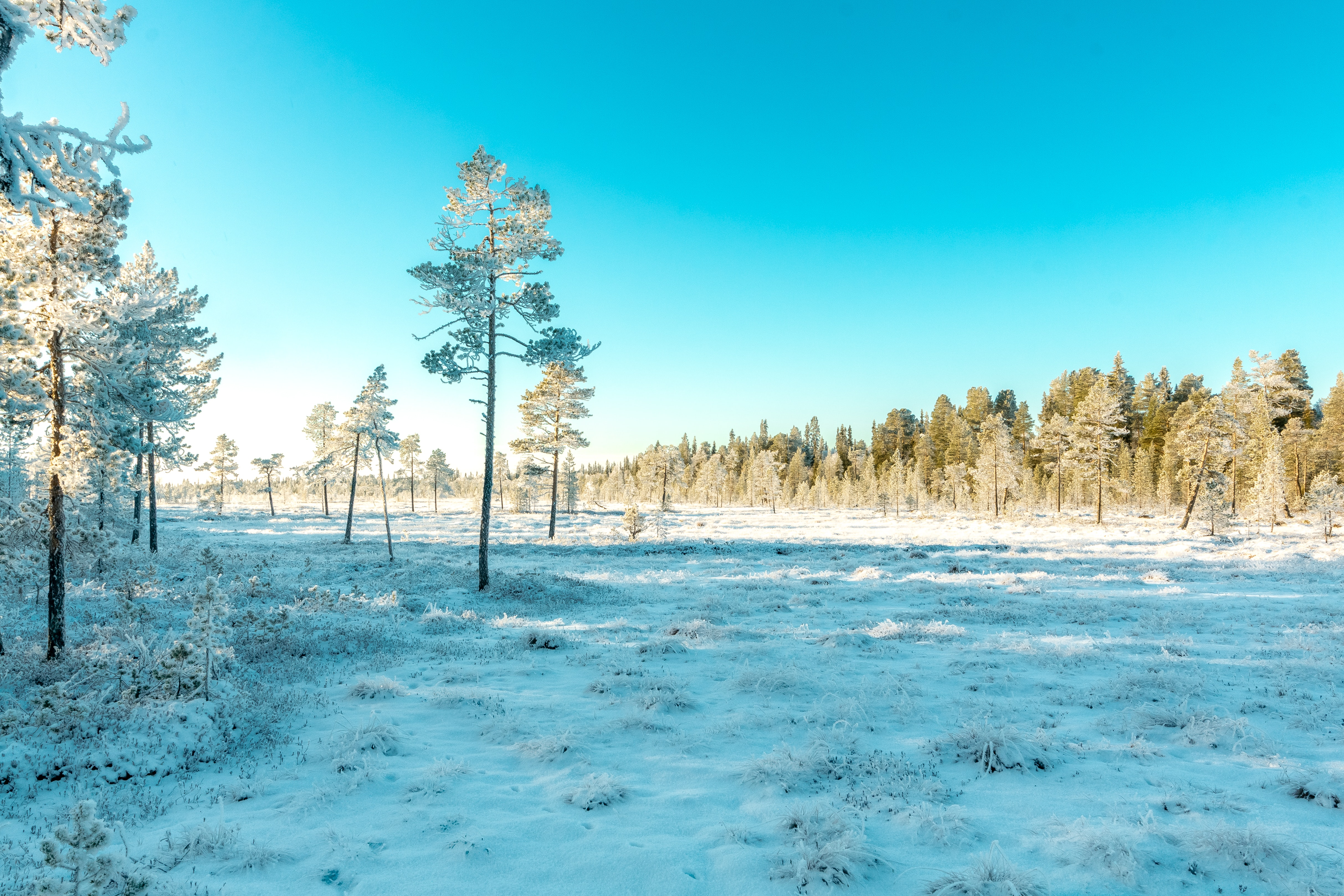 Green Leaved Trees Covered With Snow, Snow, Snow capped, Sky, Season, HQ Photo