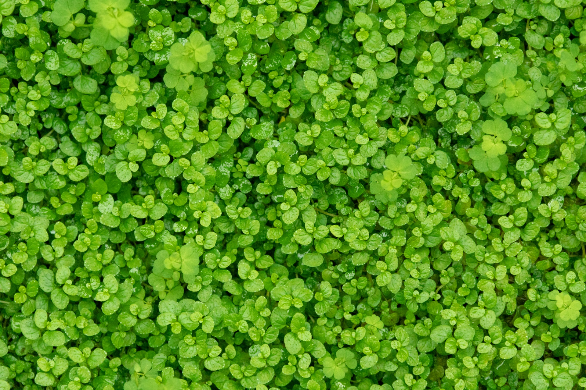 Green Leaves Free Stock Photo - Public Domain Pictures