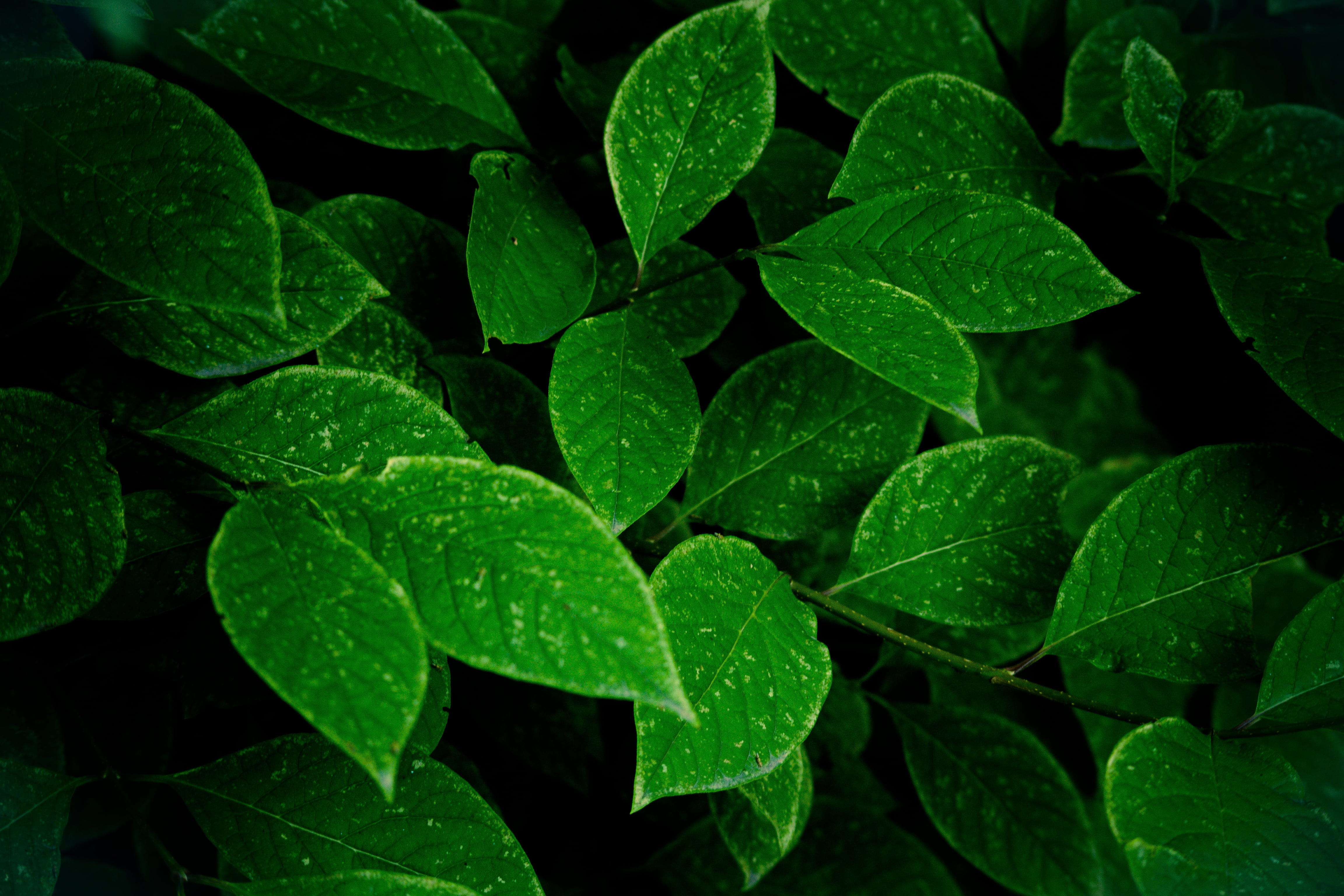 Closeup photography of green leaves HD wallpaper | Wallpaper Flare