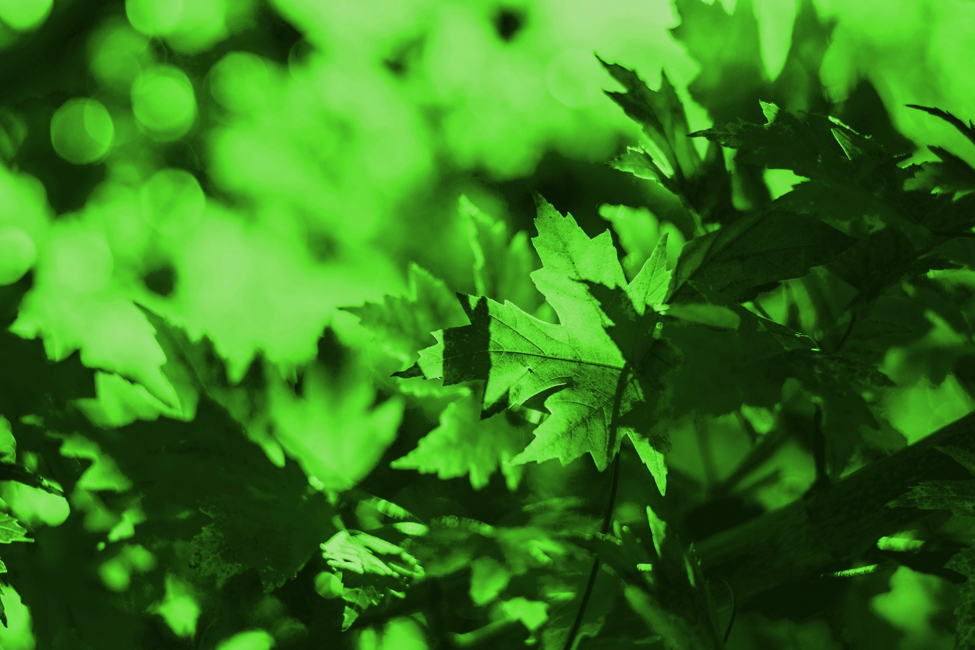 Green Leaves Background Free Stock Photo - Public Domain Pictures