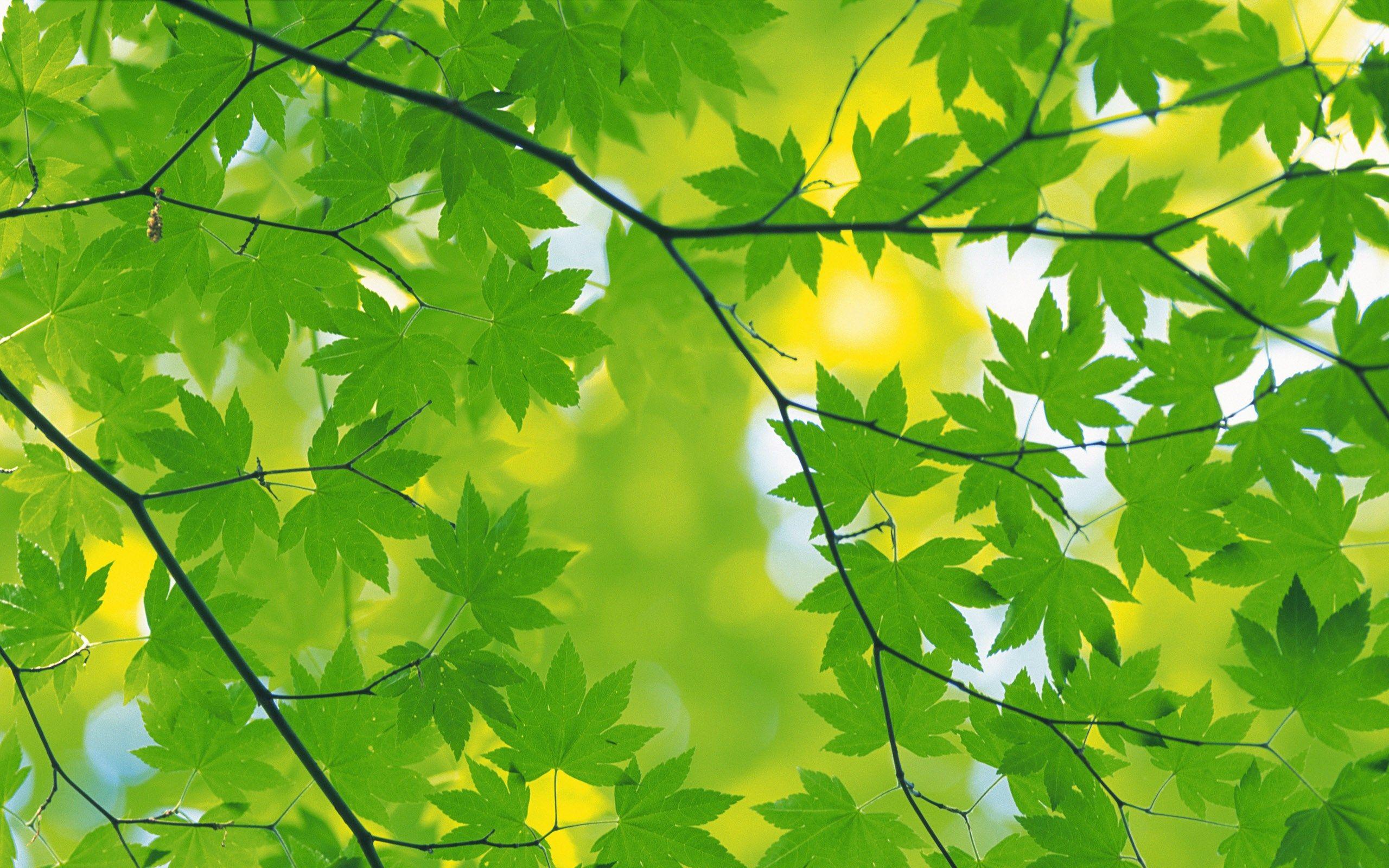 best green autumn leaves background wallpaper | ololoshenka ...