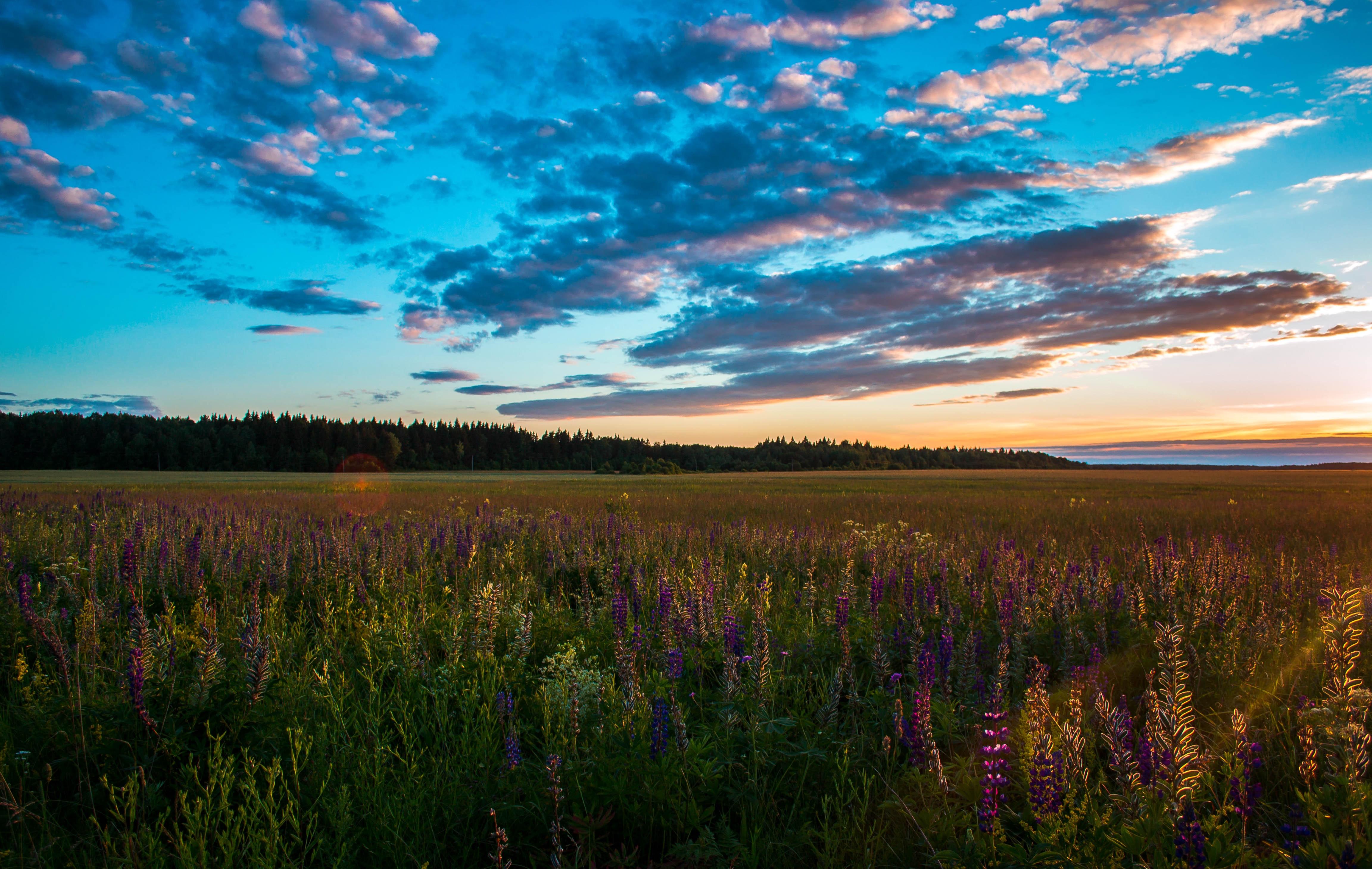 Green meadows near mountain under calm sky photo