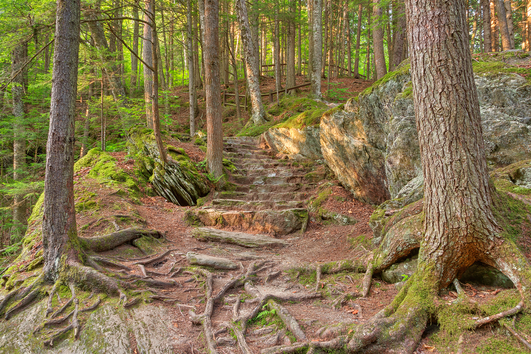 Green mountain forest trail - hdr photo