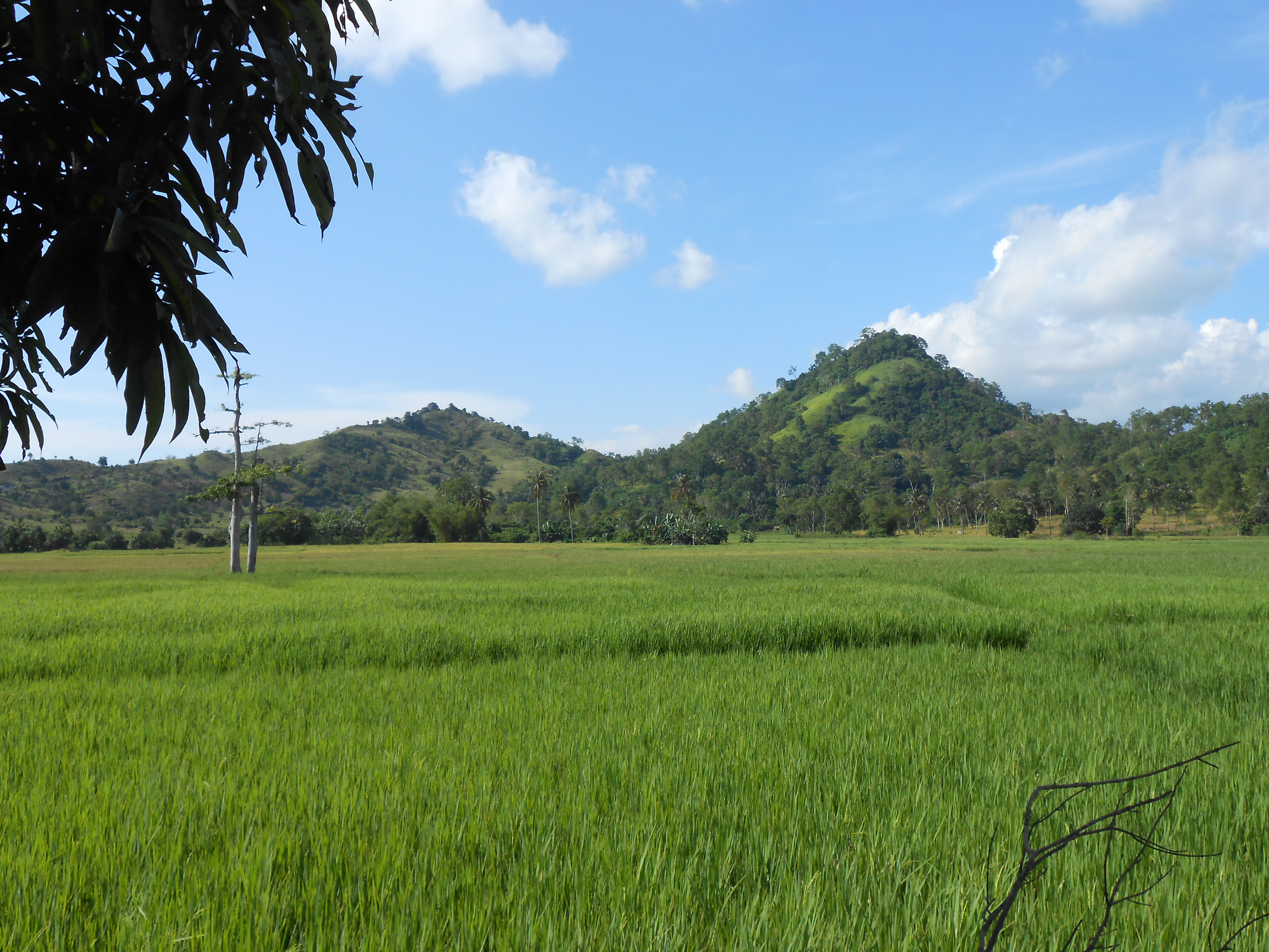 Green mountains, Fields, Green, Mountains, Nature, HQ Photo