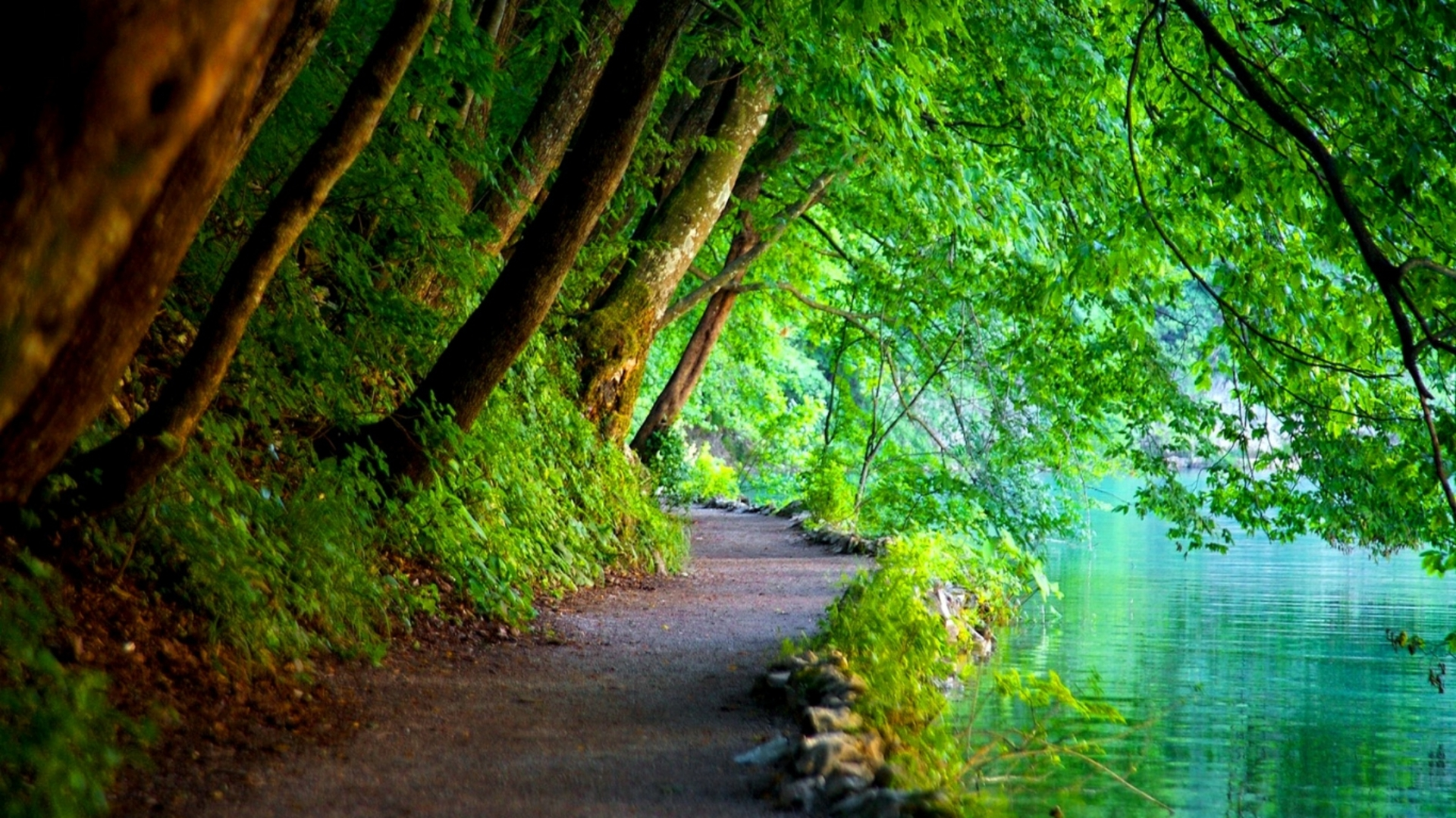 Free Photo Green Nature Forest Green Natural Free Download Jooinn