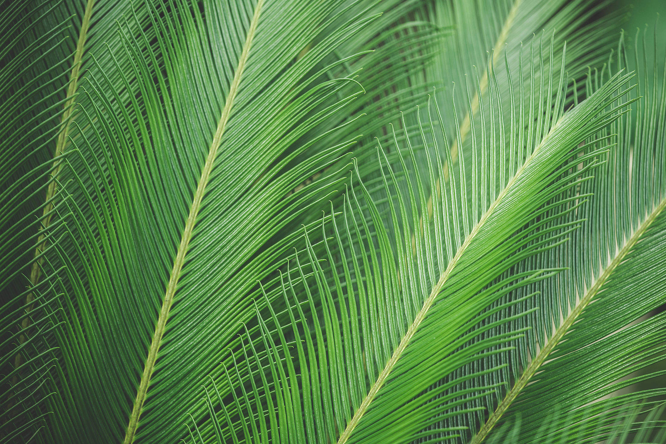 free photo green palm leaves plant pattern texture free