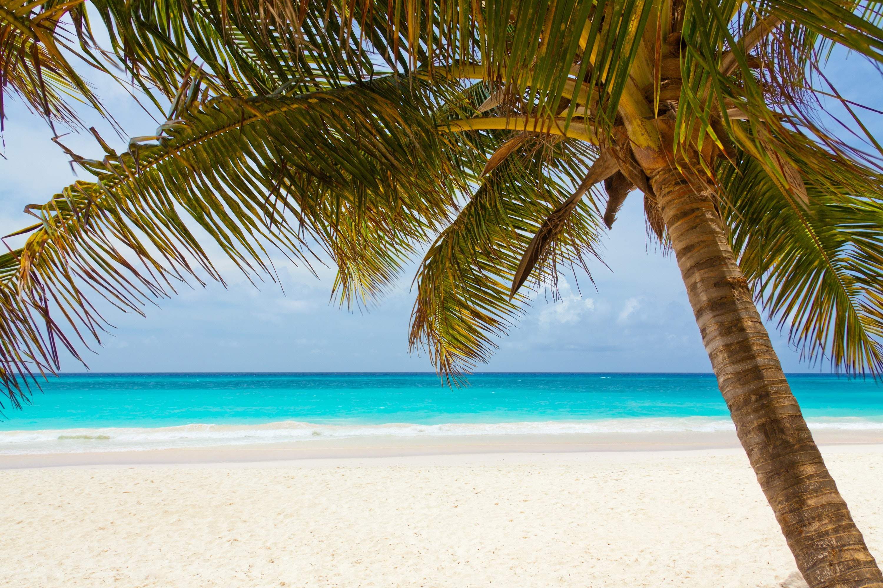 Green palm tree on beach during daytime photo