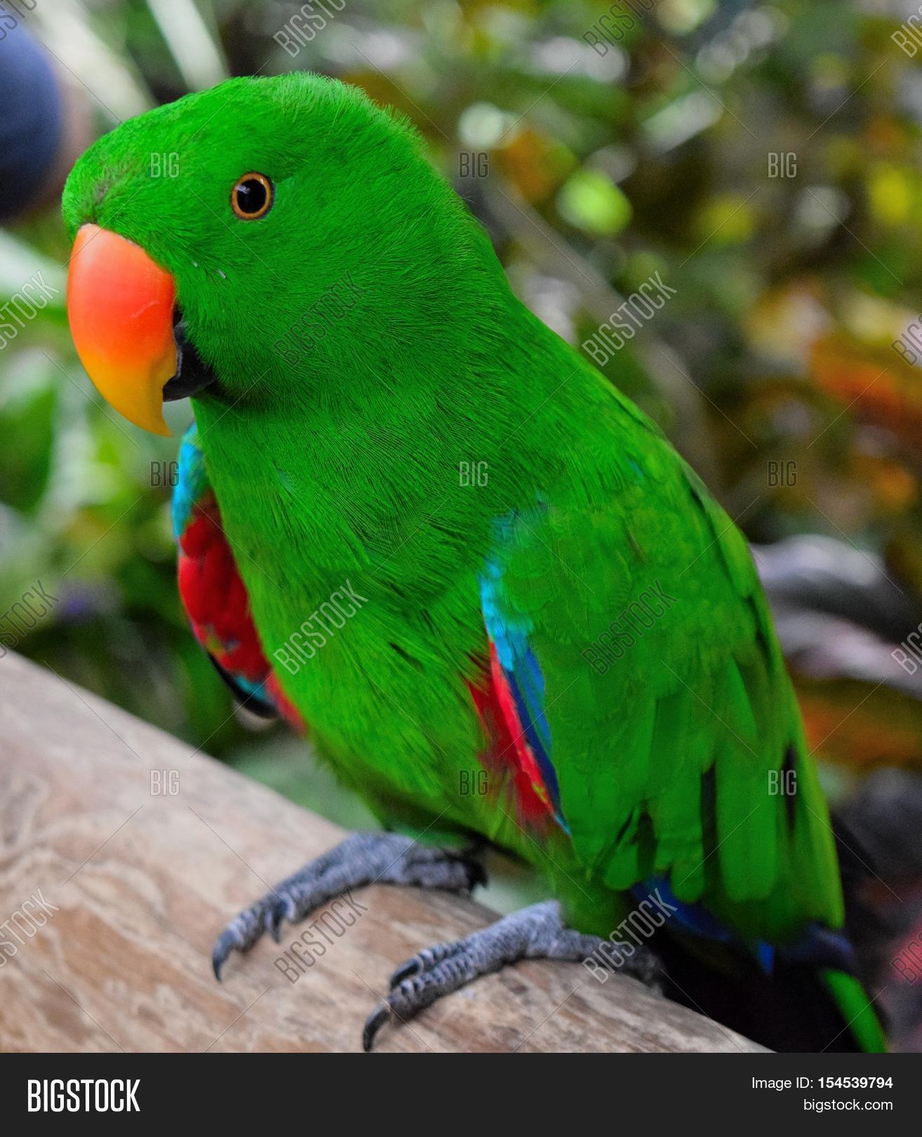 Free Photo Green Parrot Bird Green Parrot Free Download Jooinn
