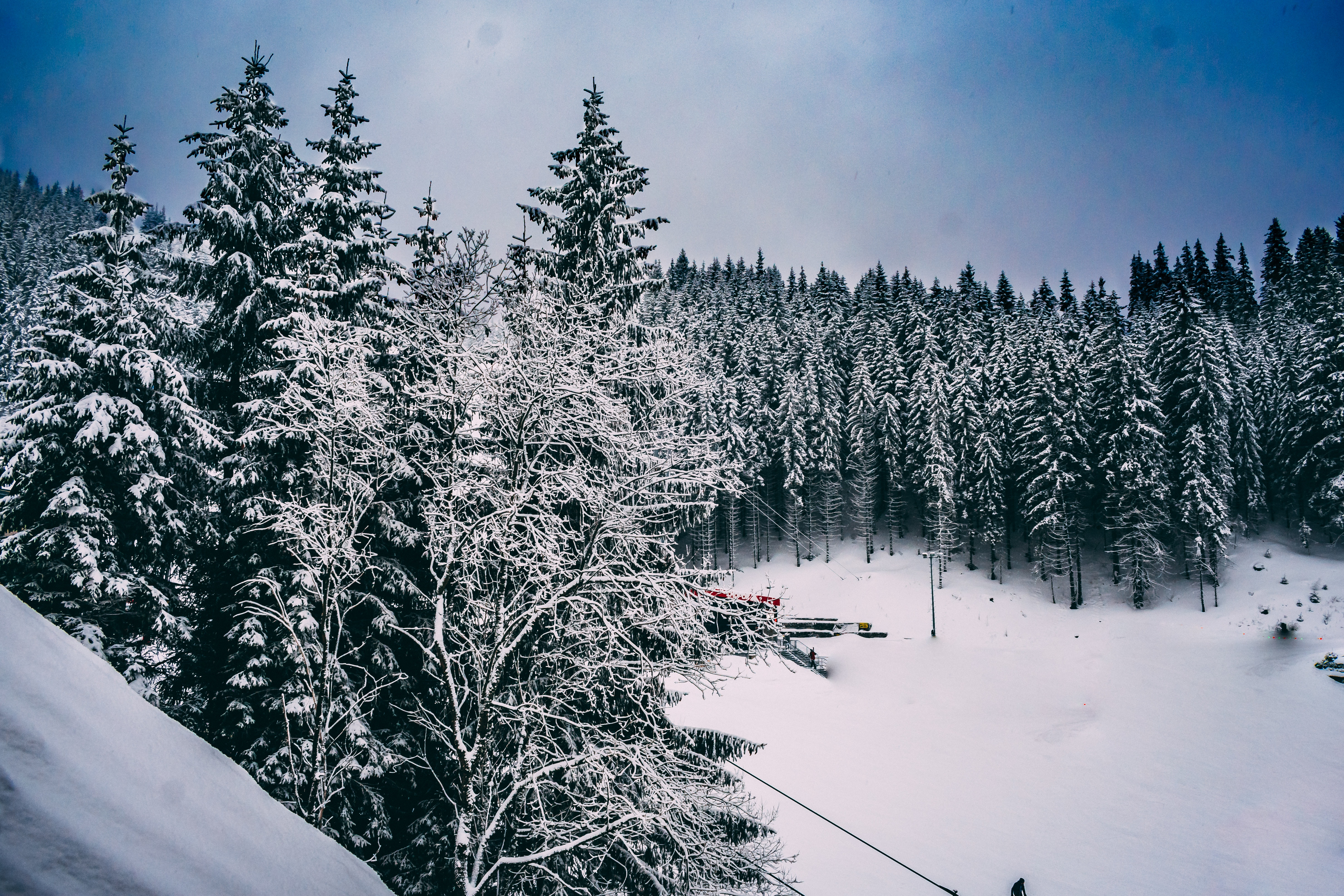 Green Pine Trees Covered With Snow Under Cloudy Blue Sky, Adventure, Skiing, Pines, Scenic, HQ Photo