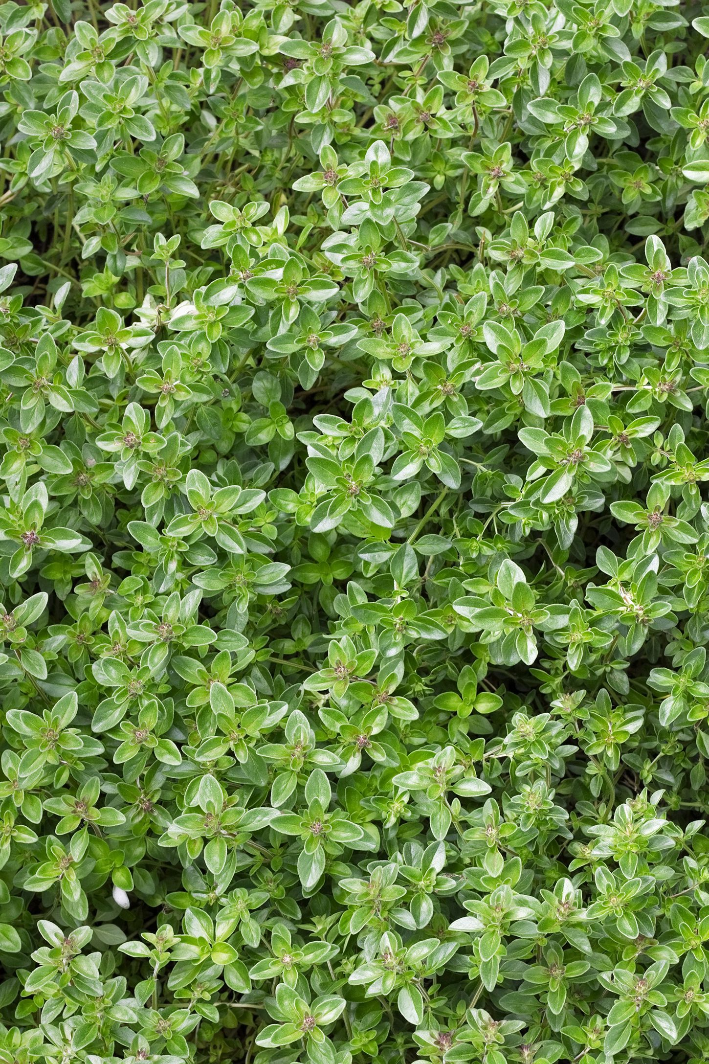 Free Photo Ground Cover Texture Plant Grow Free Download Jooinn