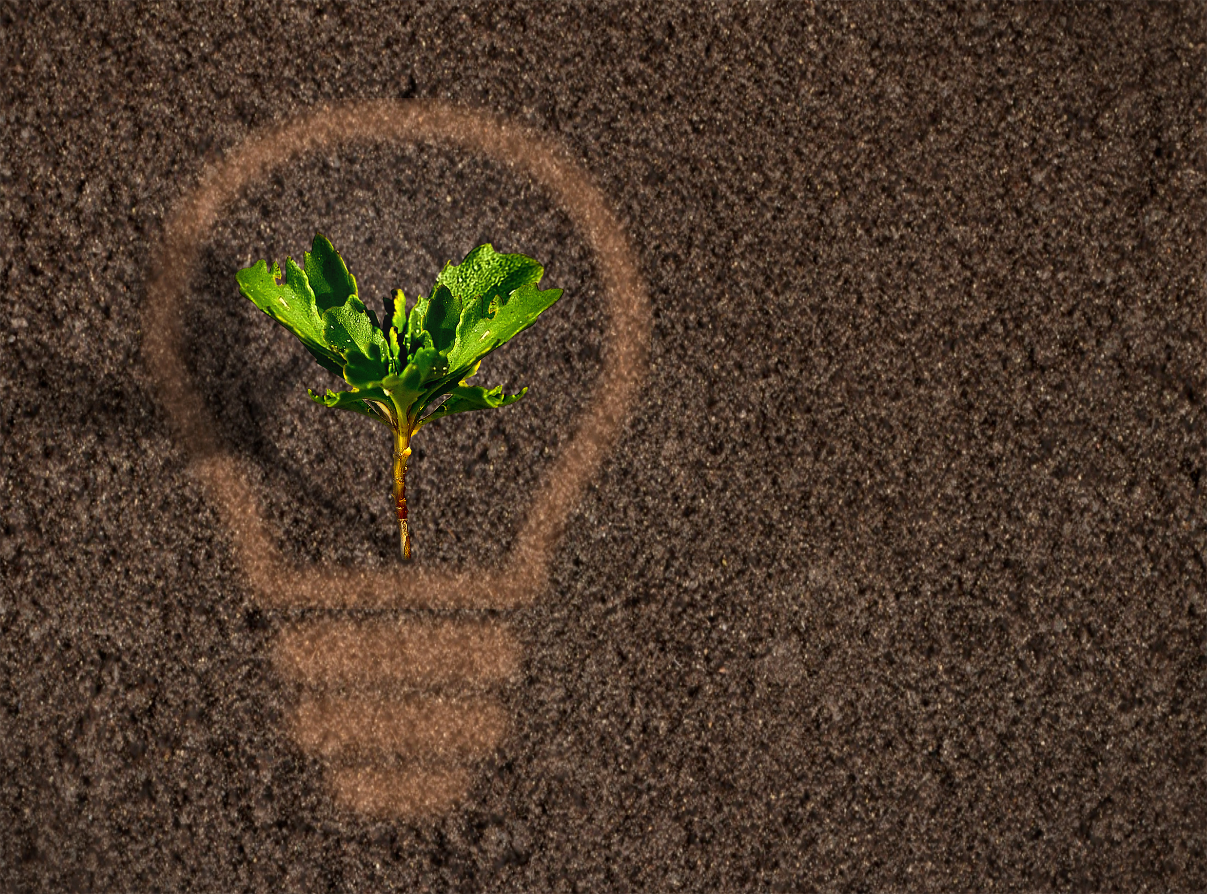 Green plant sprout growing within a lightbulb silhouette on soil photo