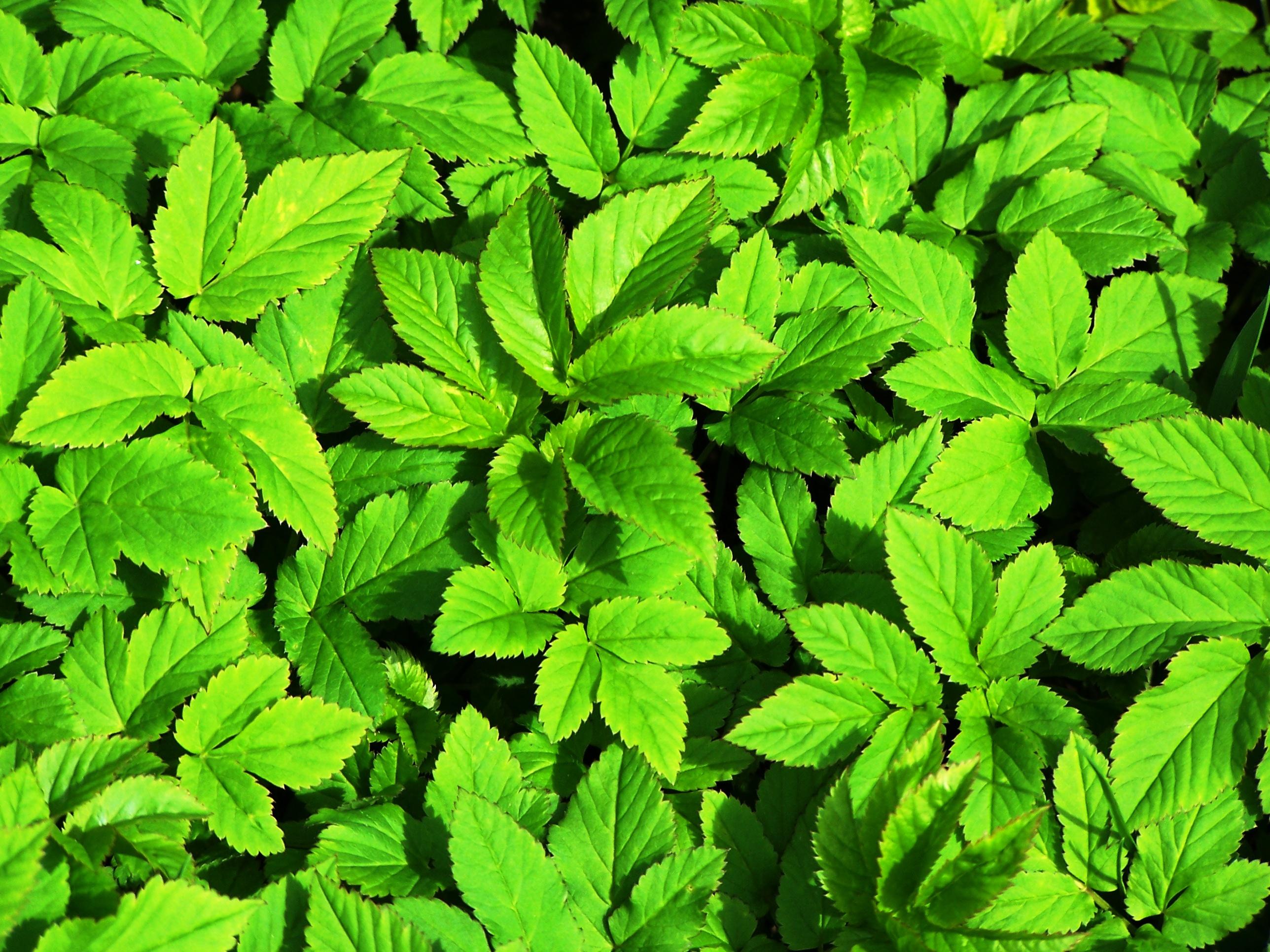 Green plants photo