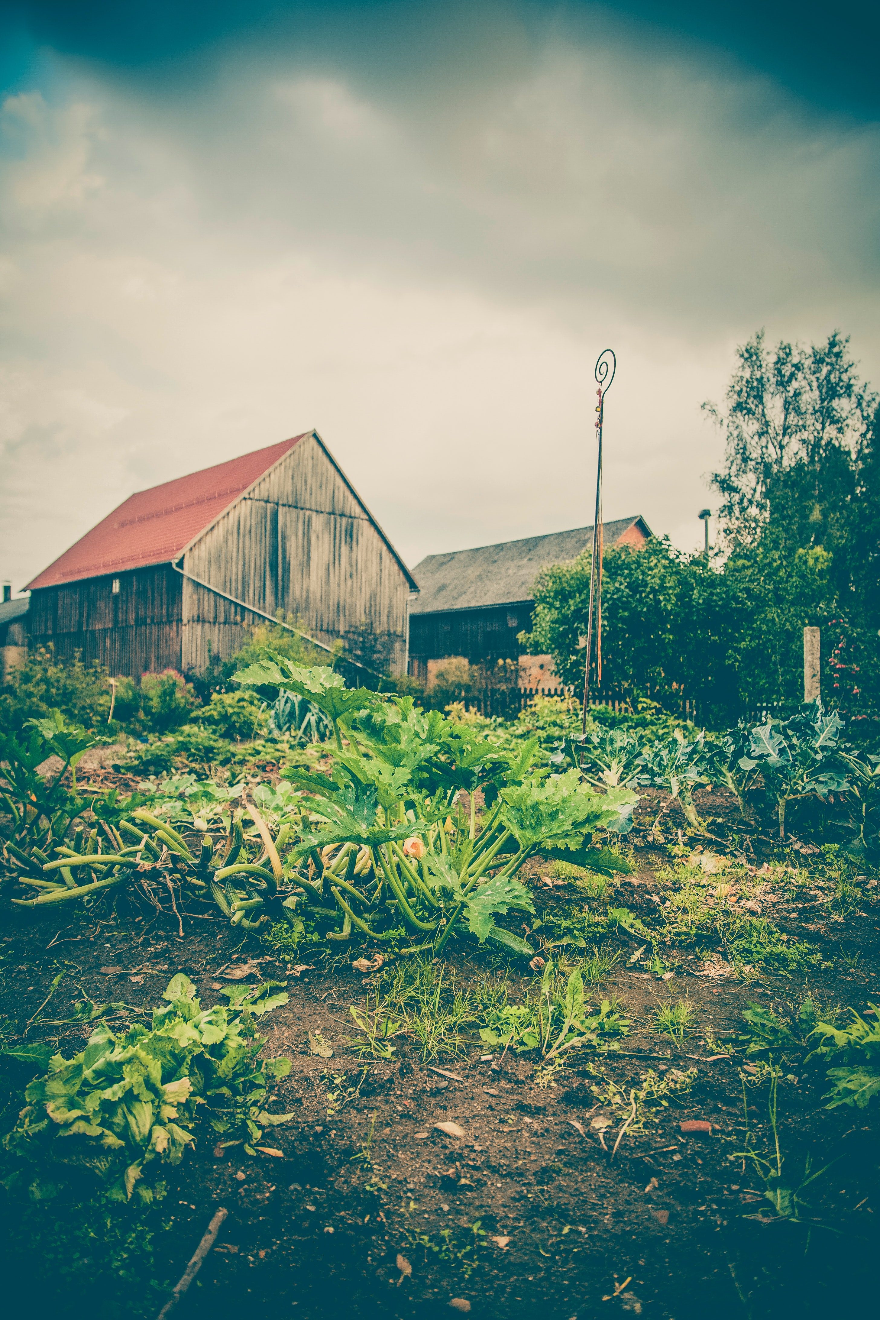 Green plants near white and red wooden house under dramatic clouds during daytime photo