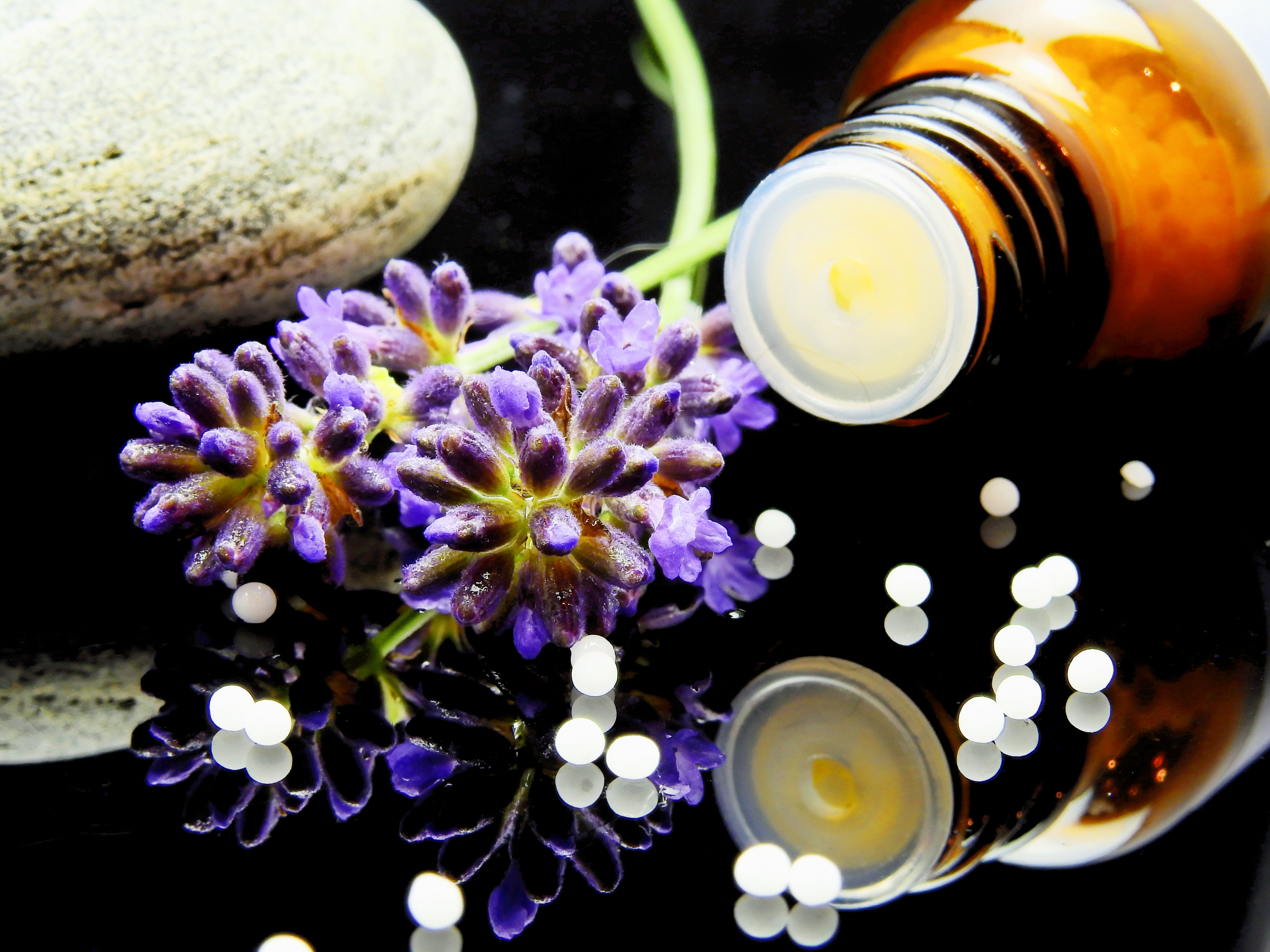Green Purple Flower, Pharmaceutical, Reflection, Naturopathy, Medicine, HQ Photo