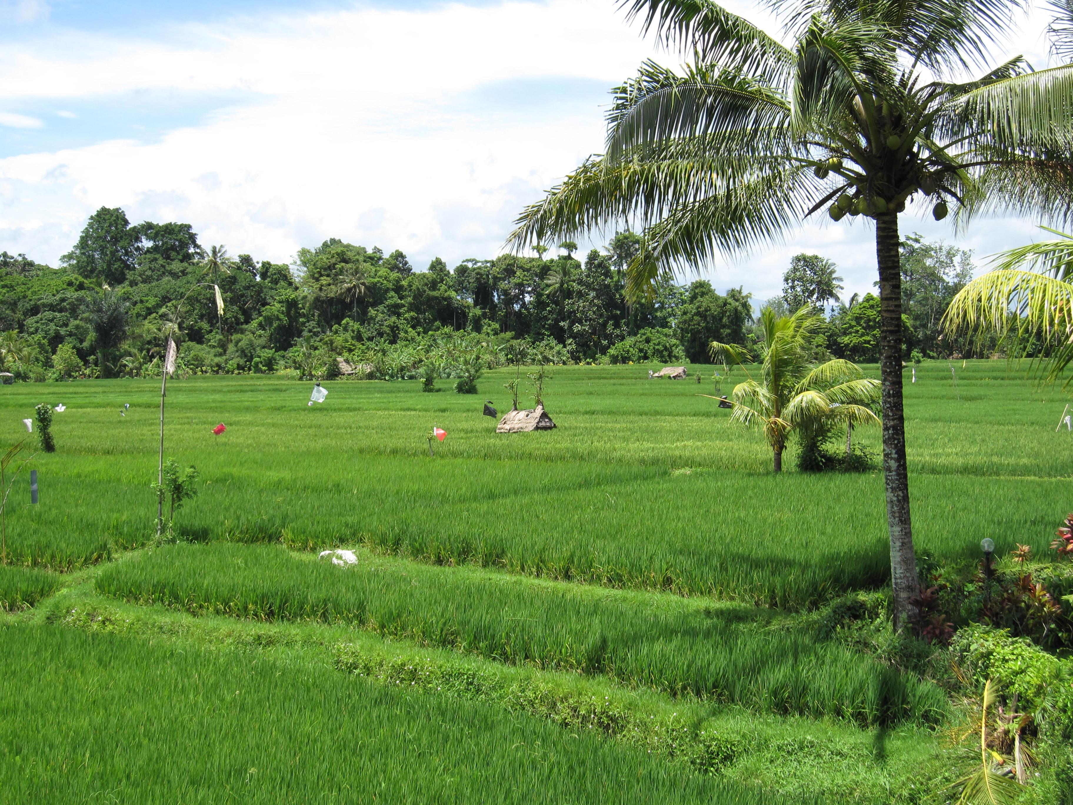 Green Rice Fields in Bali | Half Year Spin | Gyan, Ram, Rena, and Jeev