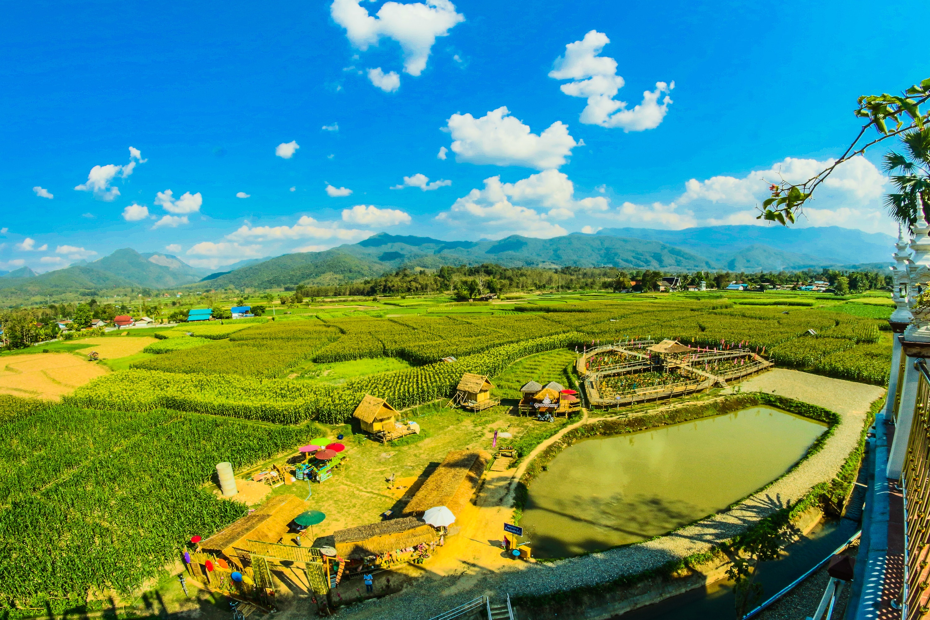 Green Rice Fields, Agricultural, Plants, Landscape, Mountains, HQ Photo