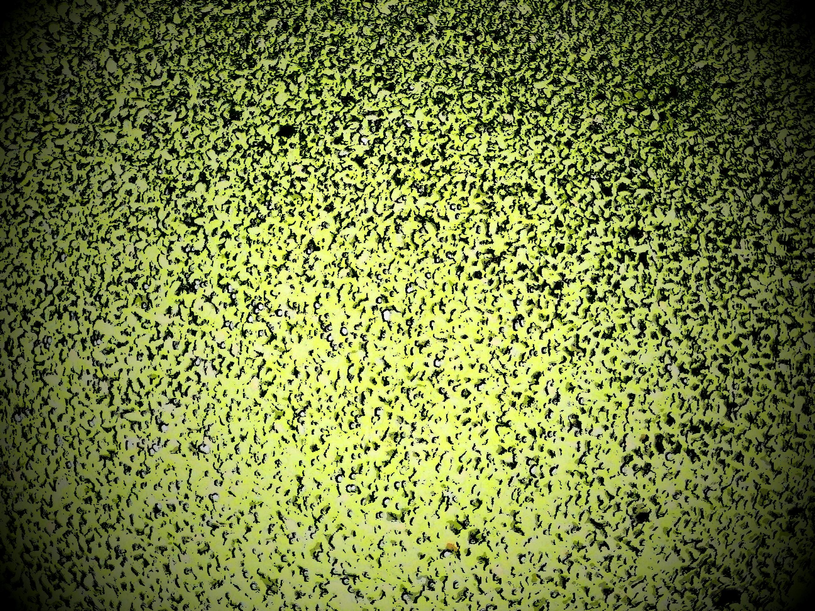 Green speckled vignette background photo