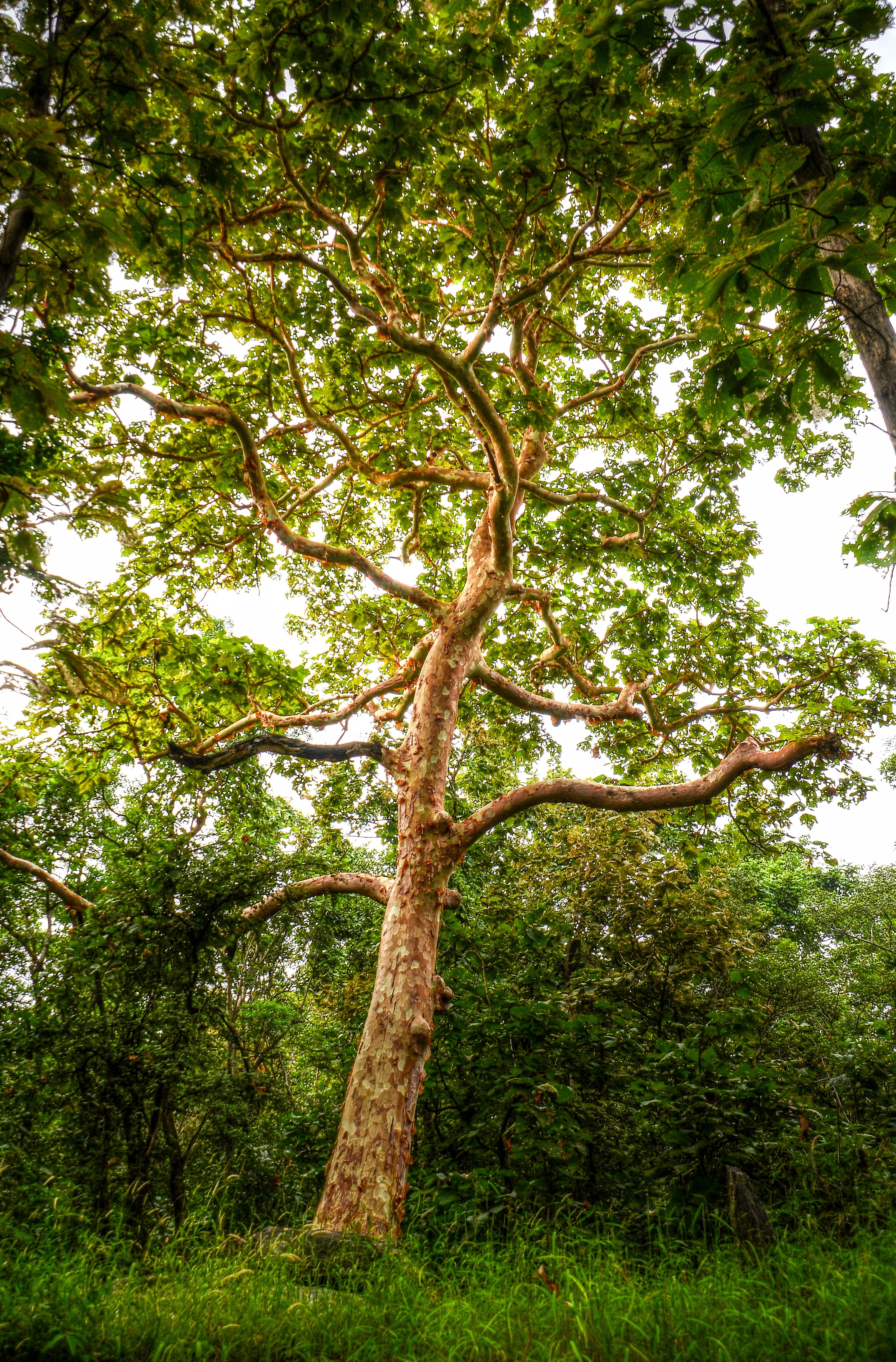 Green tall tree photo