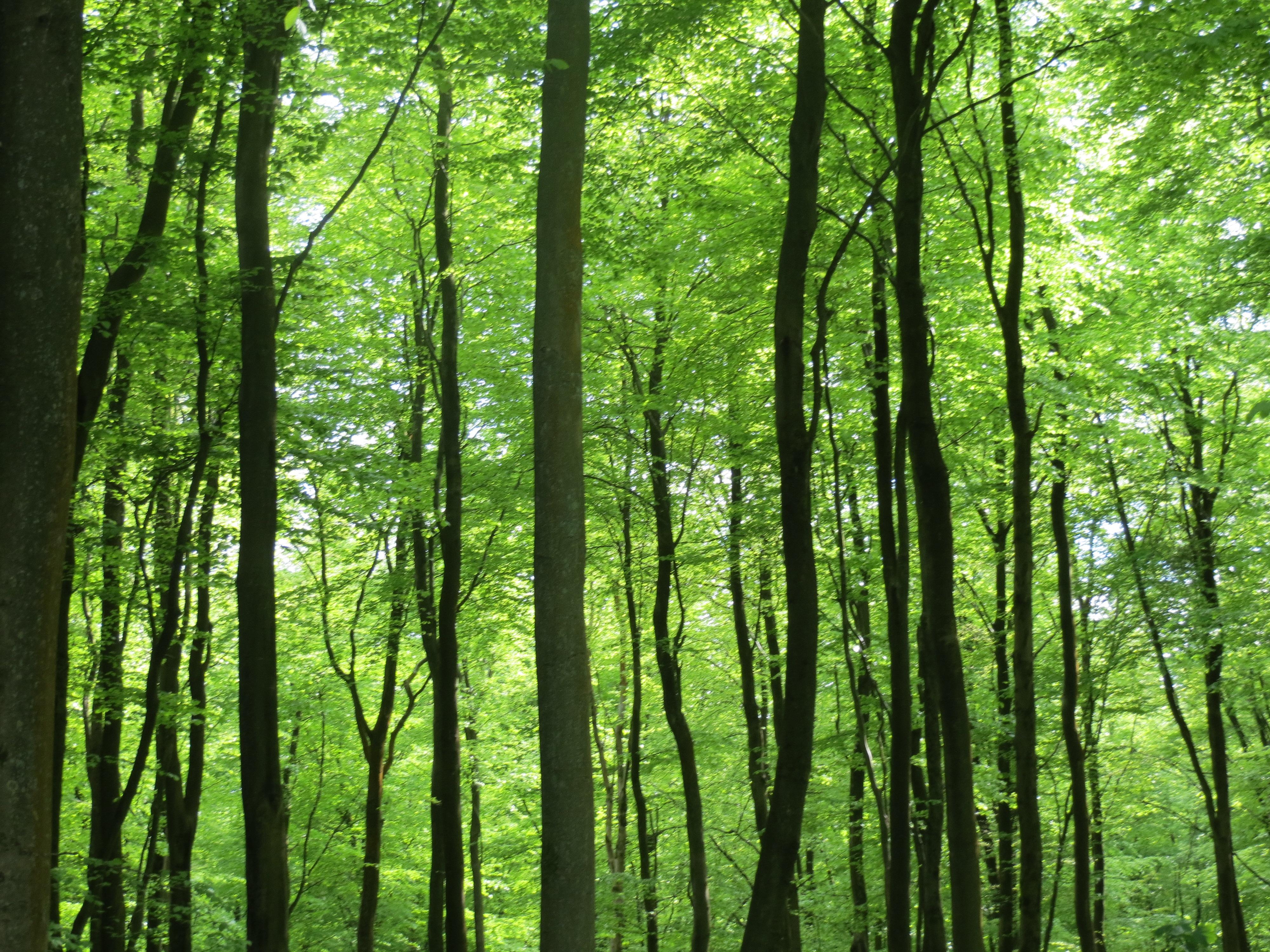 Free Photo Green Tall Tree Bark Nature Trees Free