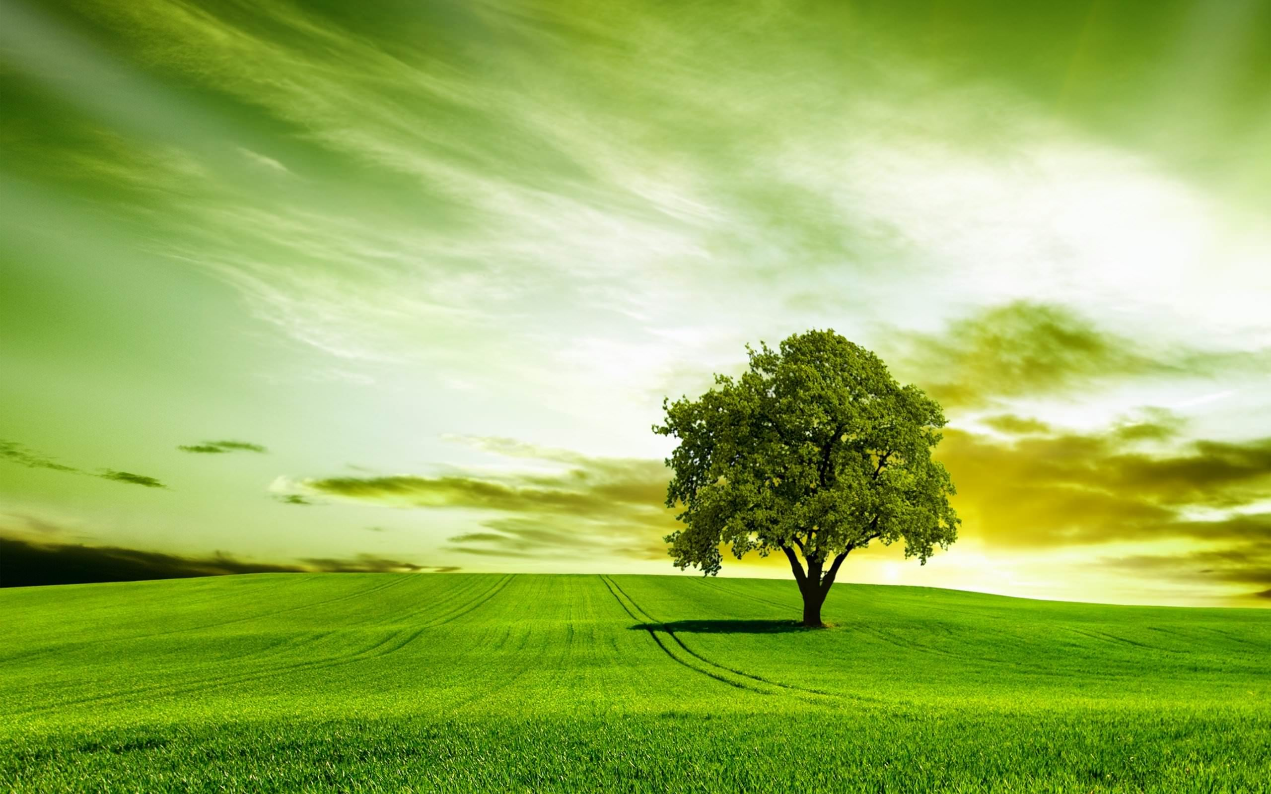 Nature Wallpaper For Facebook Cover Page Hd Green Tree High Quality ...