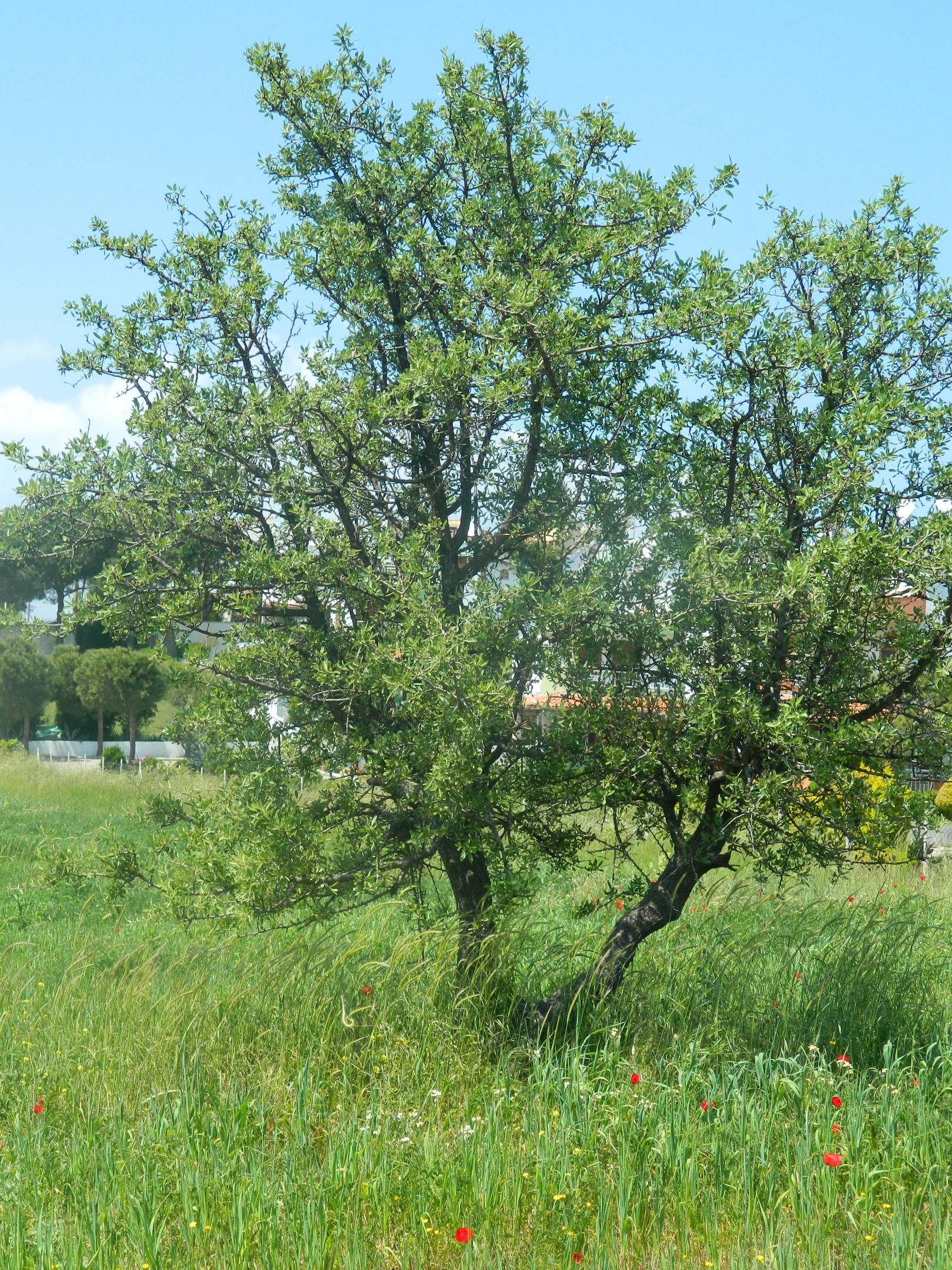 Green Tree, Grass, Green, Nature, Summer, HQ Photo