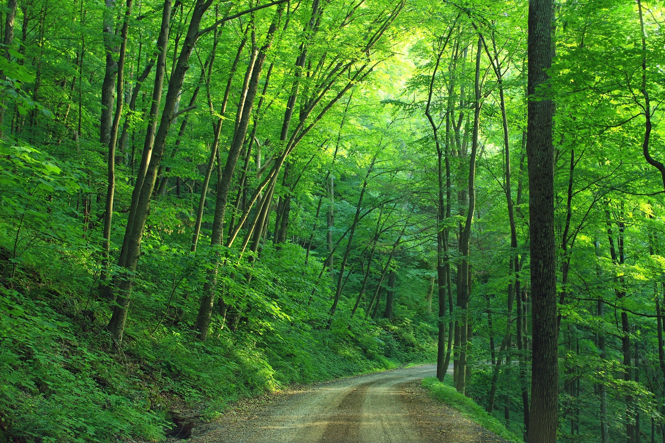 Green Tree Beside Roadway during Daytime, Trail roads, Trail, Tree trunks, Way, HQ Photo