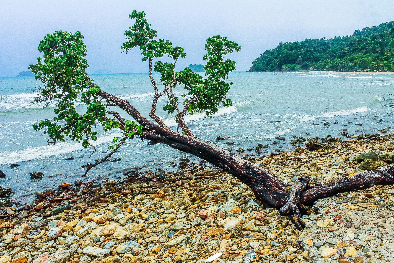 Green tree beside seashore near green mountain photo