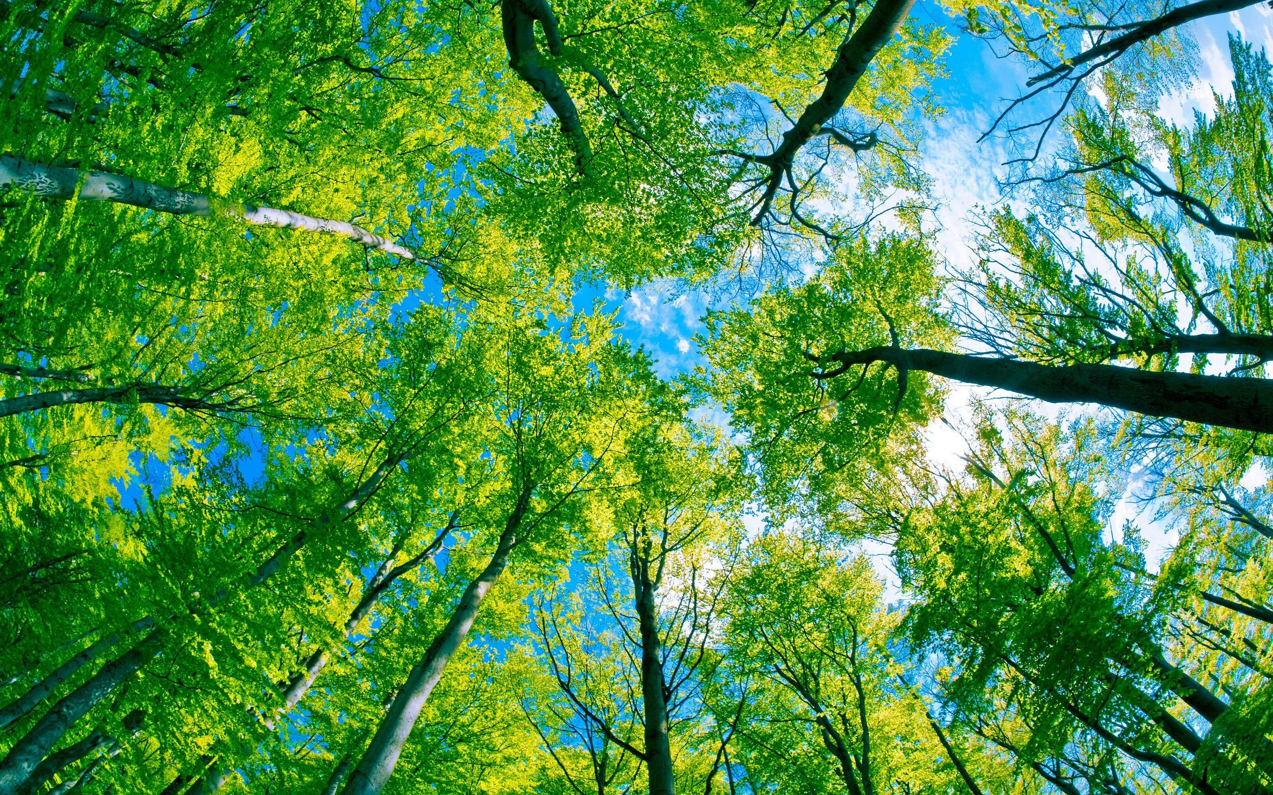 Green Forest Tree And Pure Blue Sky wallpaper | nature and landscape ...