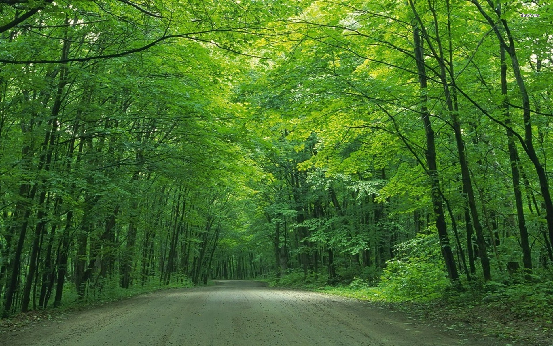 trees tree wallpapers road under nature forest hd greenery jooinn landscapes