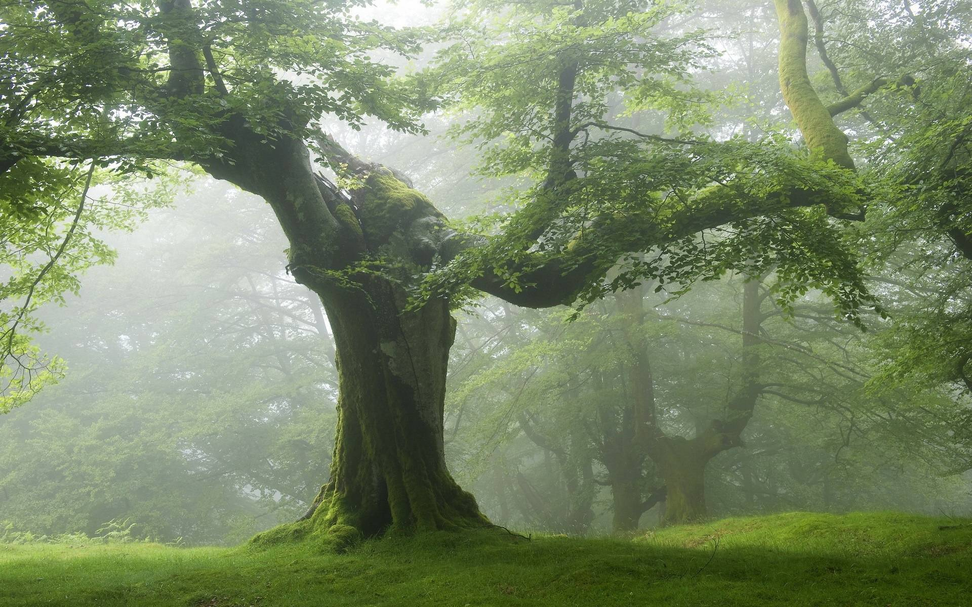 Old tree green forest - Nature Wallpaper
