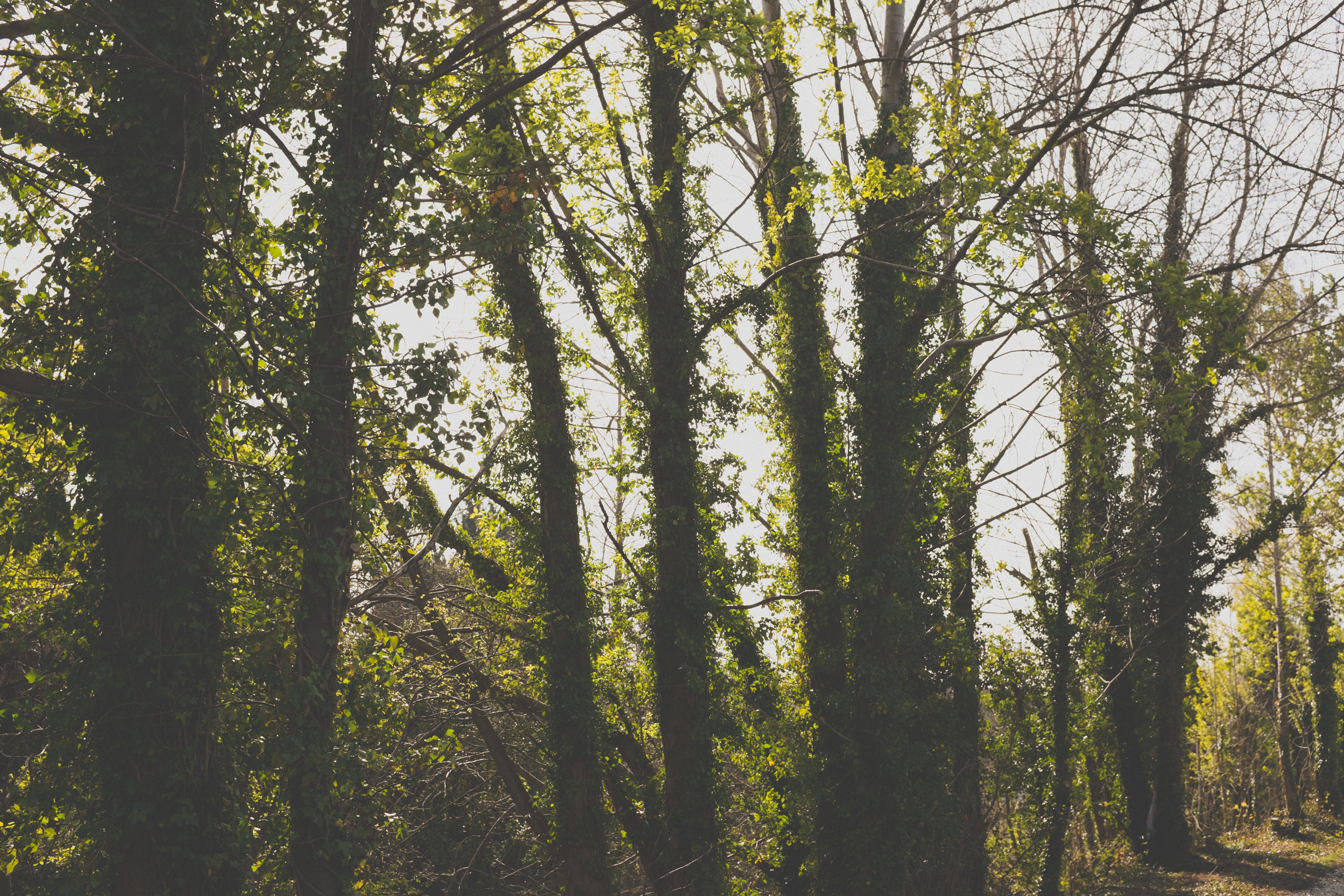 Green Trees in Forest - Picography Free Photo
