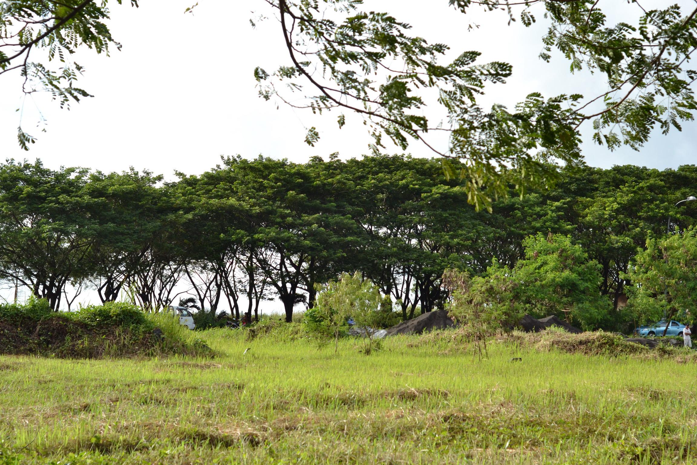 Green Trees, Beautiful, Branch, Grass, Green, HQ Photo
