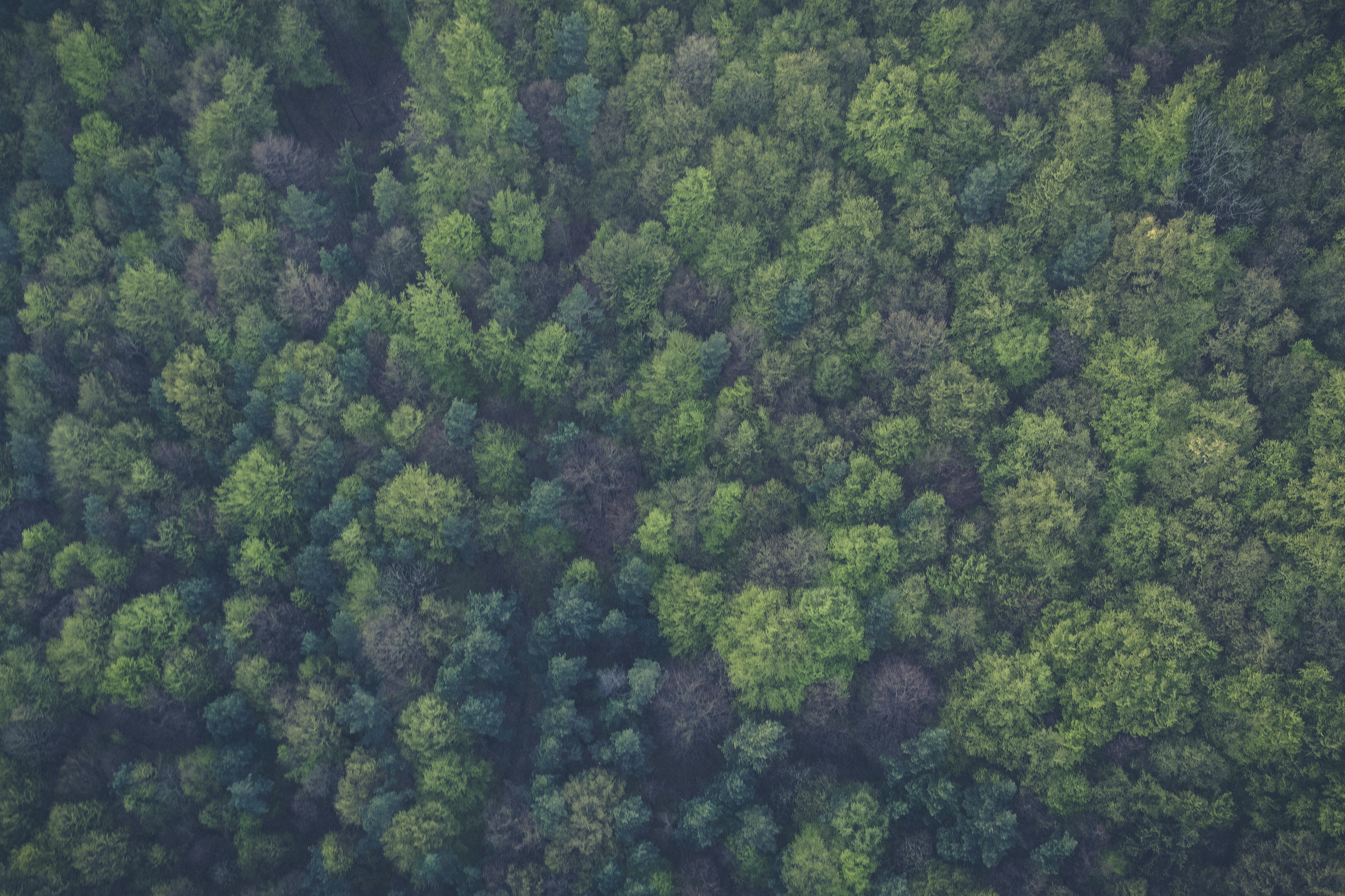 Green Trees, Trees, Nature, Green, Forest, HQ Photo