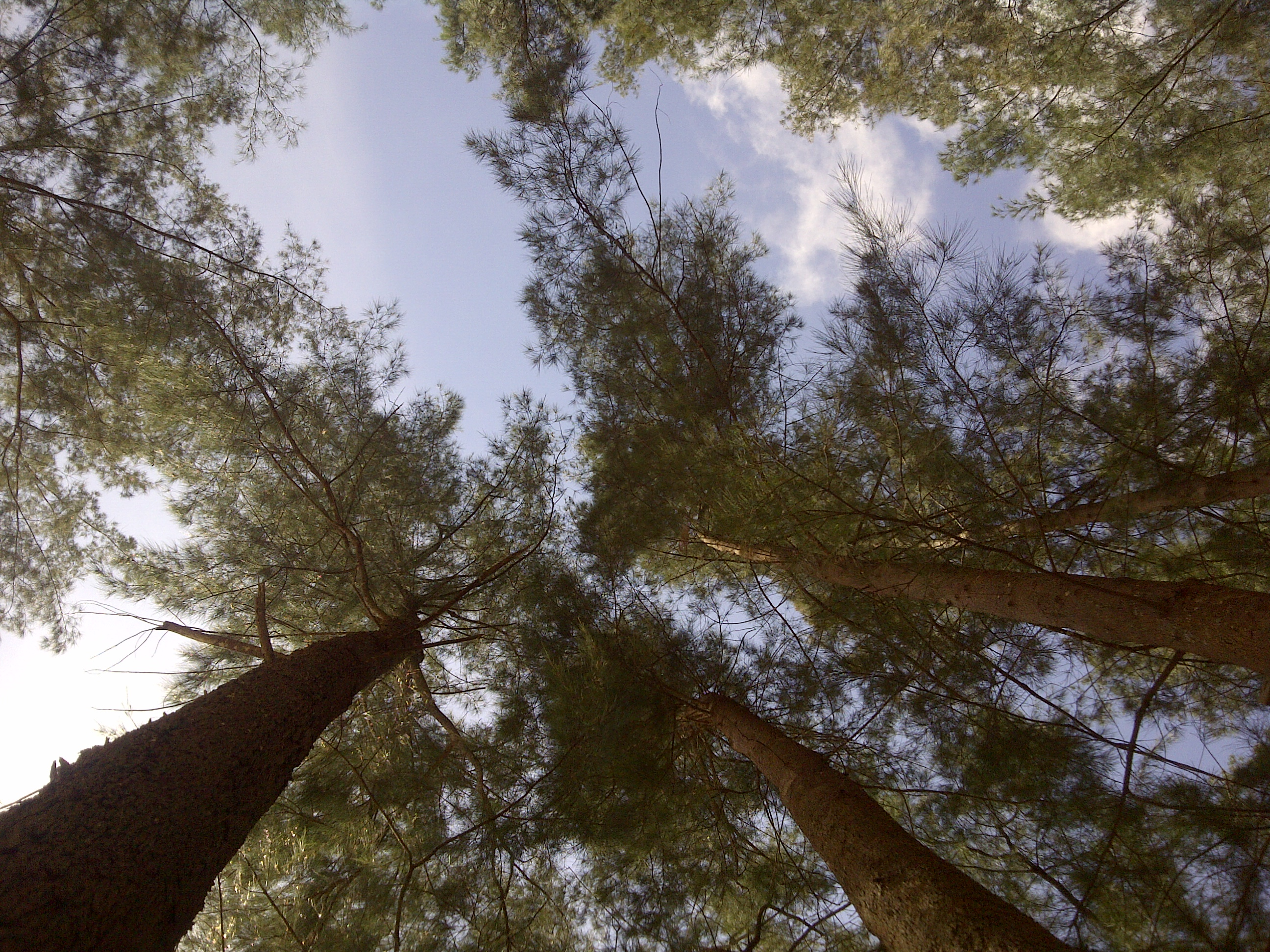 Green trees, Bend, Forest, Green, Jungle, HQ Photo