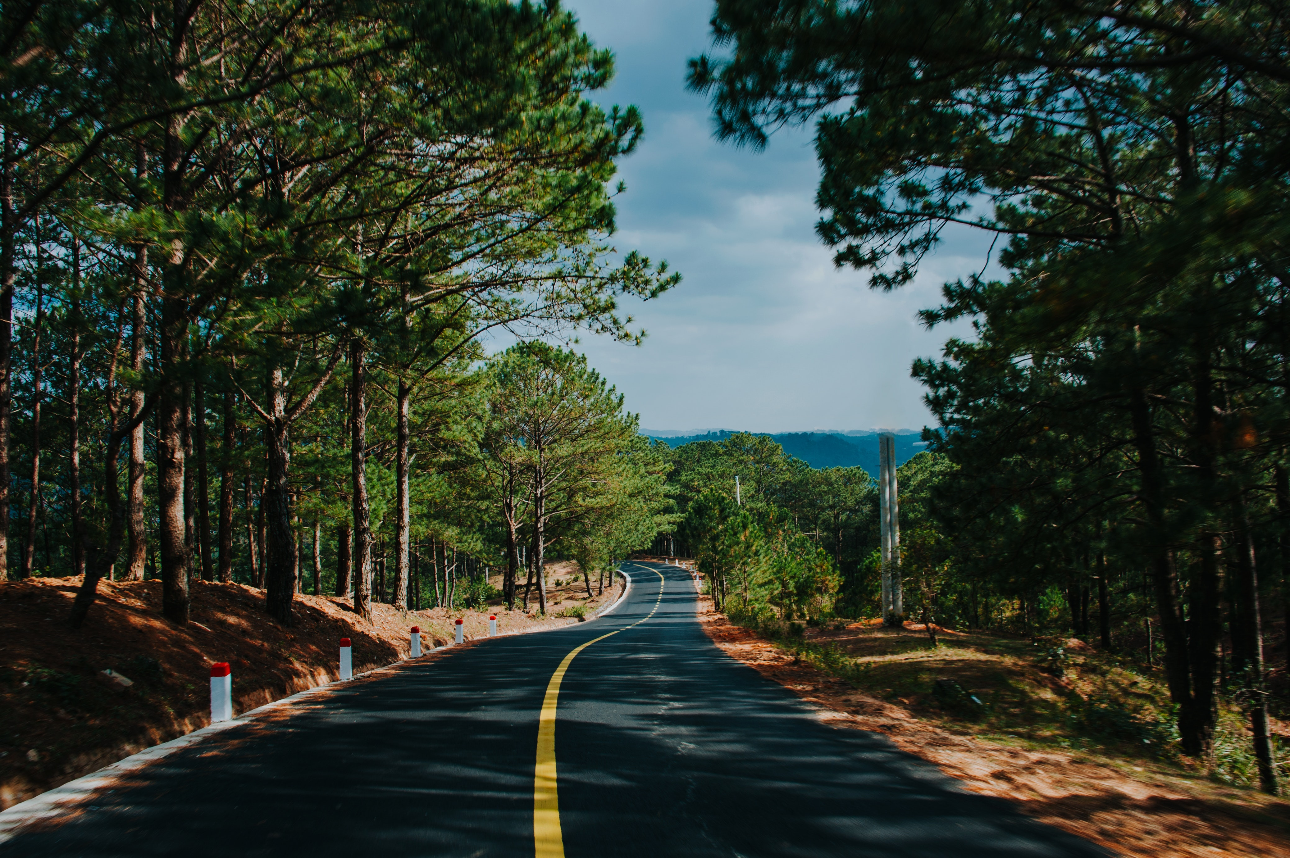 Green Trees, Asphalt, Outdoors, Trees, Travel, HQ Photo