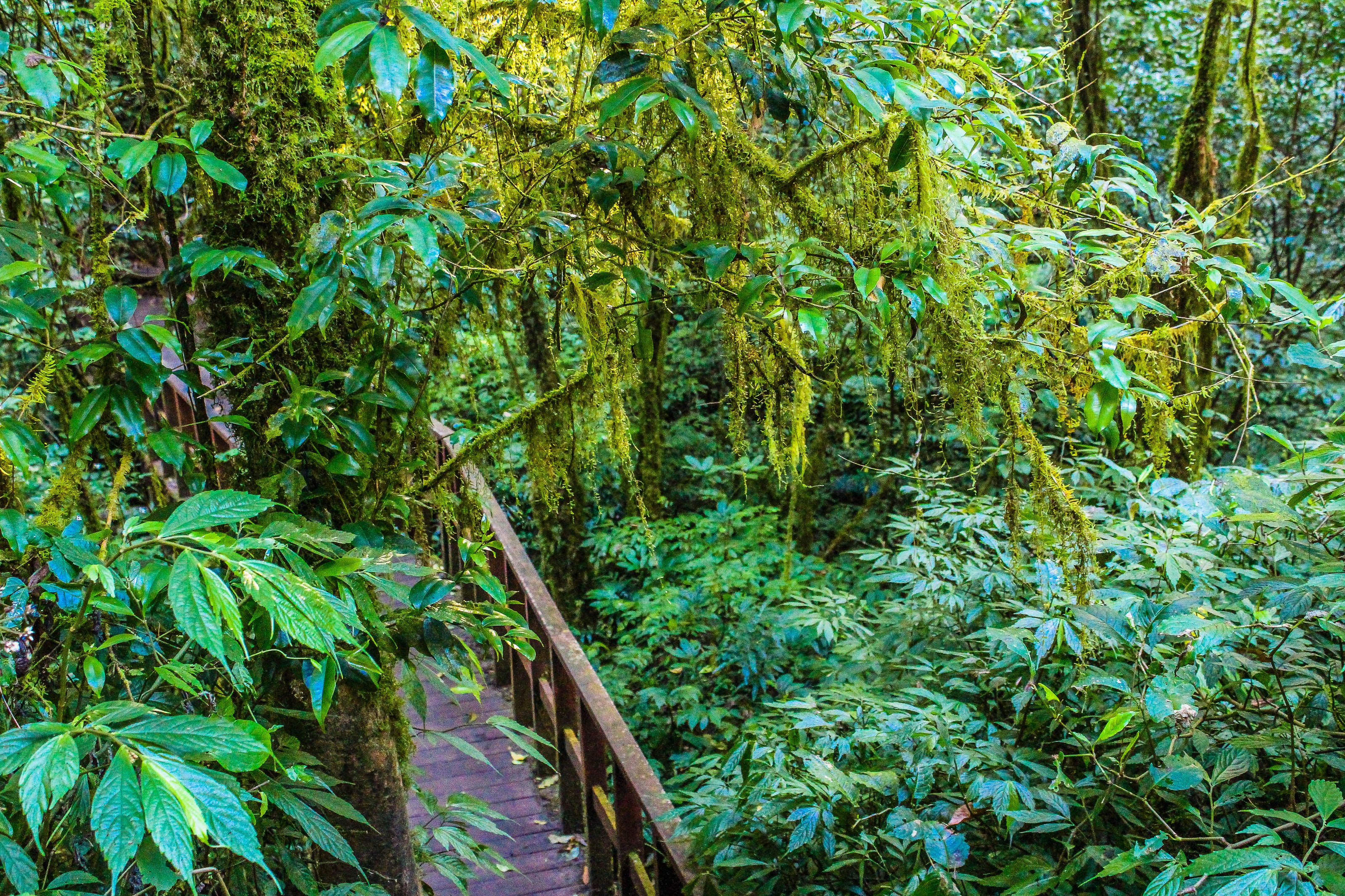 Green Trees, Trail, Plant, Rainforest, Scenery, HQ Photo
