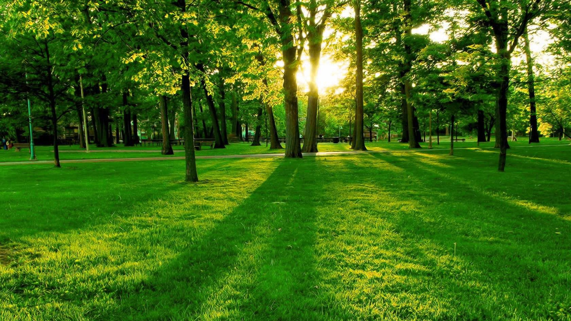 All Branched Out Tree Experts - green-trees-grass_1920x1080
