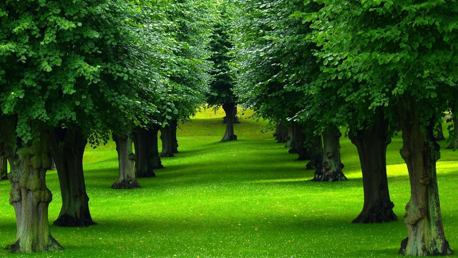 beautiful green trees in one line — Steemit