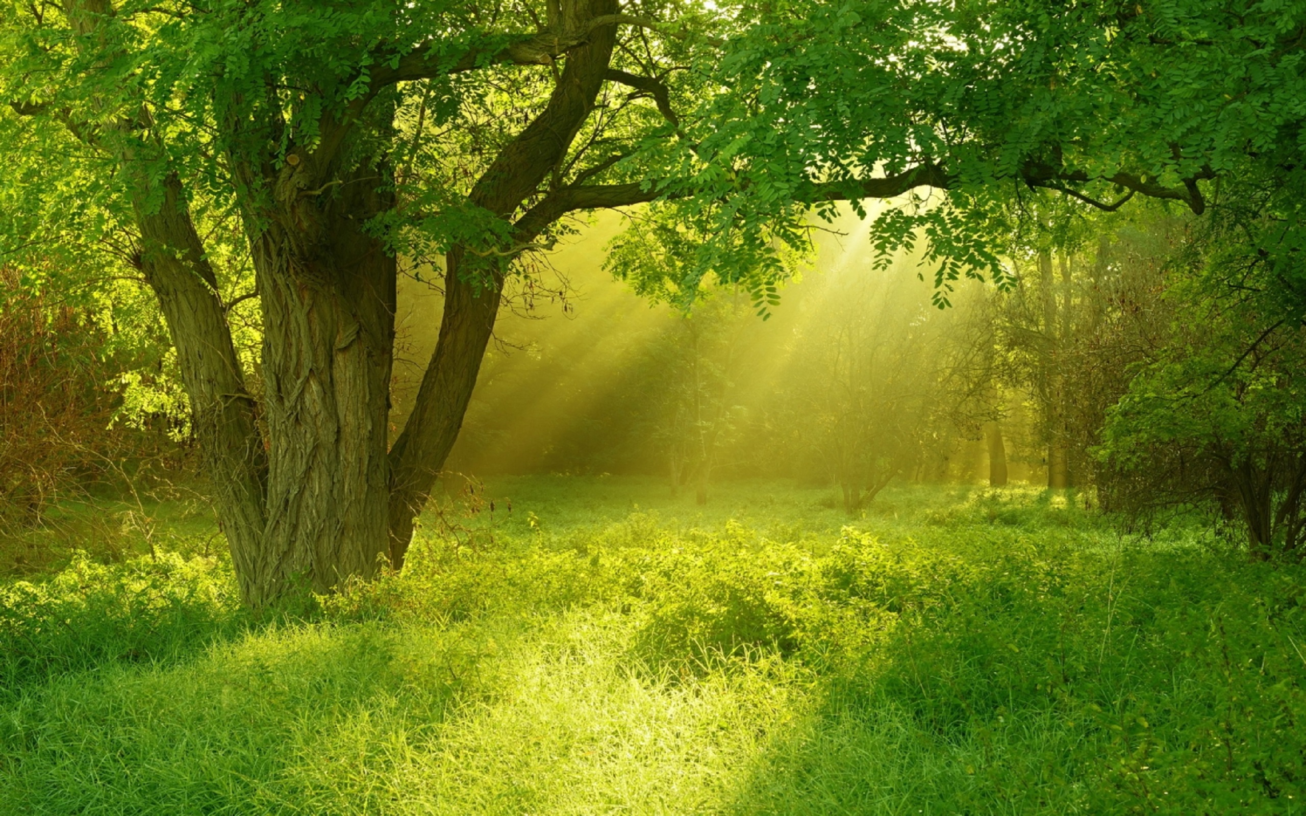 Free photo: Green Trees - Countryside, Shine, Wilderness ...