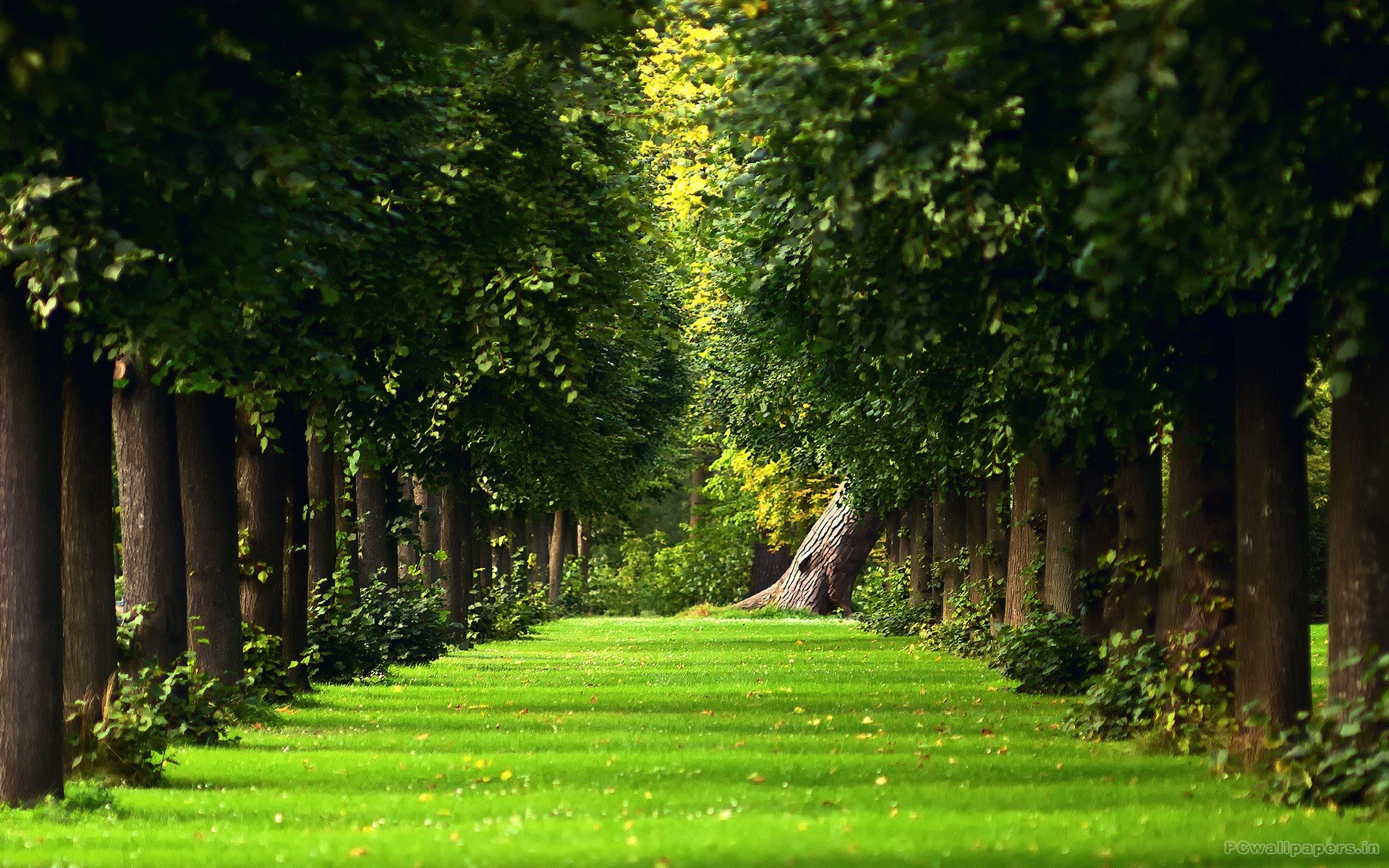 All Branched Out Tree Experts - green-trees-wallpaper_1920x1200
