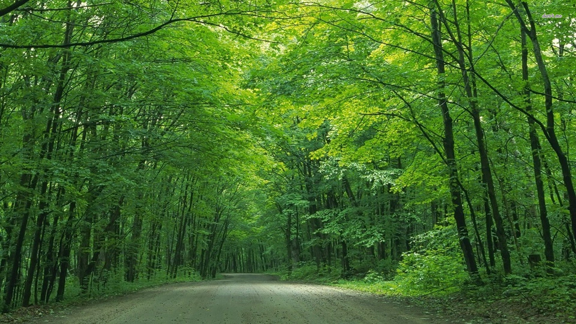 Road under the green trees wallpaper - Nature wallpapers - #20976