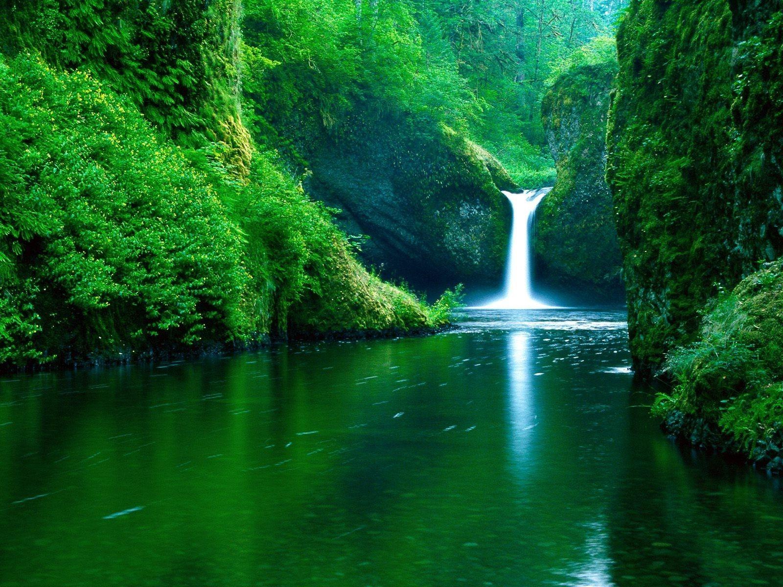 Green trees #1688283 | UNIVERSAL PROFESIONALISM CLEO2525 | Pinterest ...