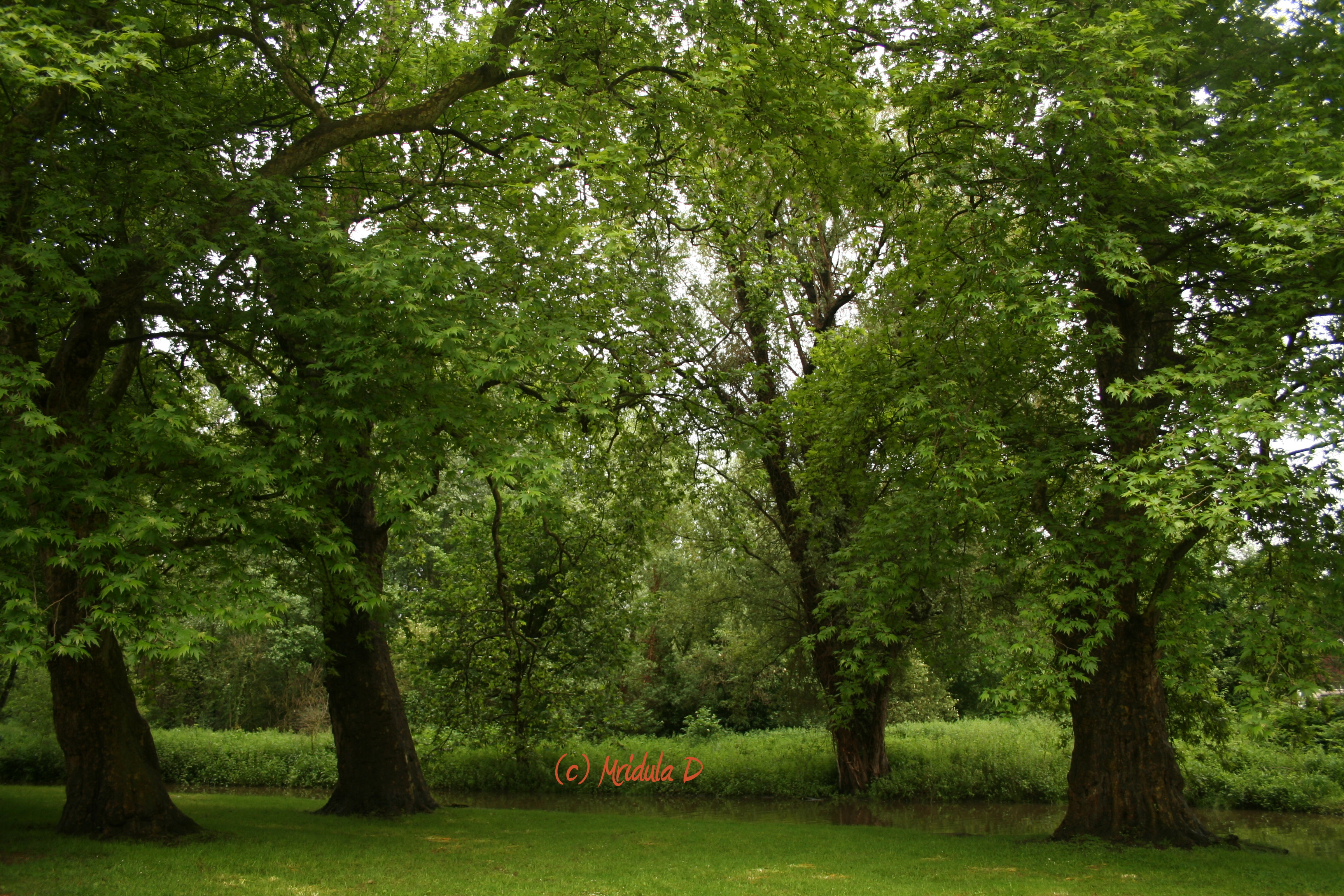Grand Green Trees - Travel Tales from India and Abroad