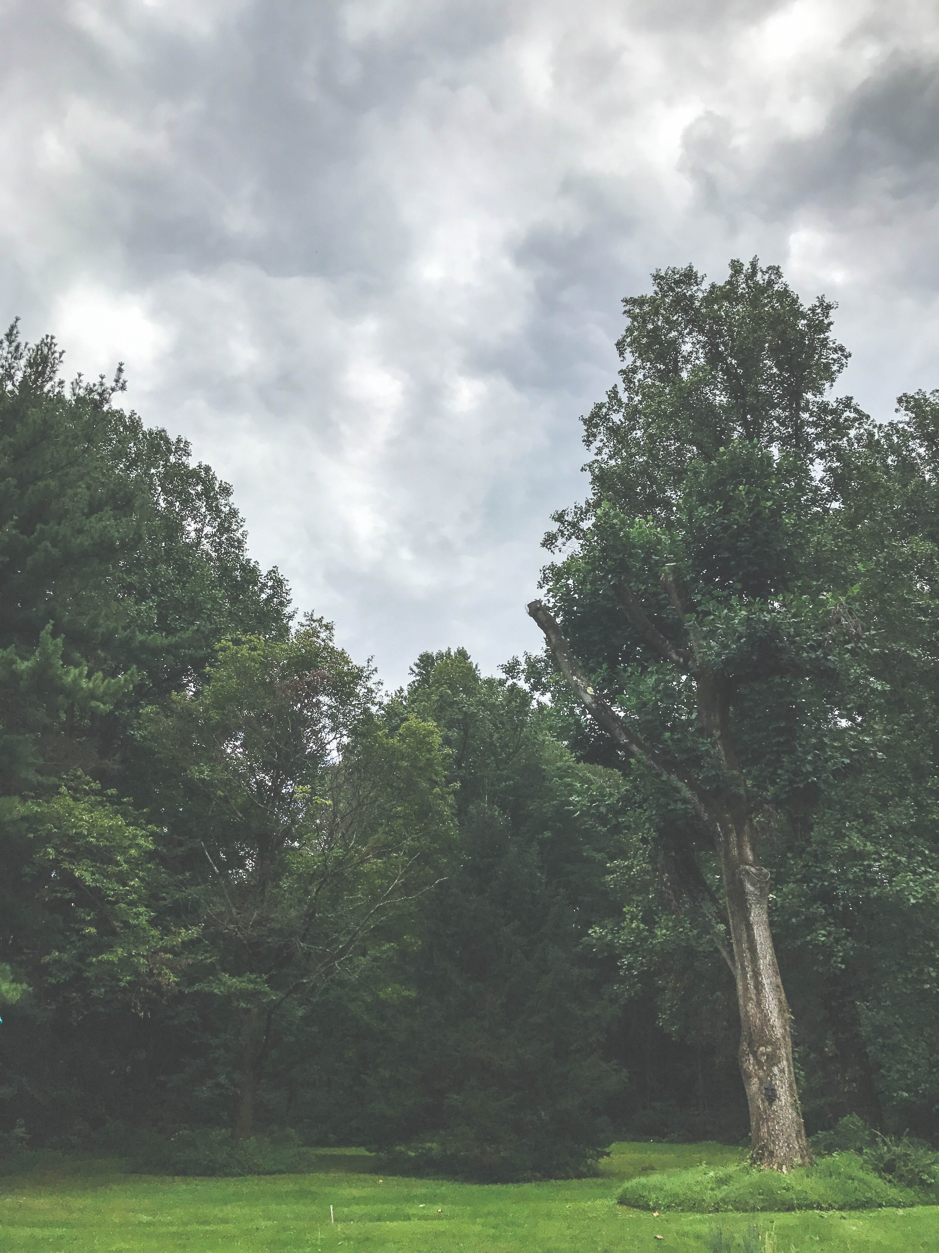 Green trees under the cloudy sky photo