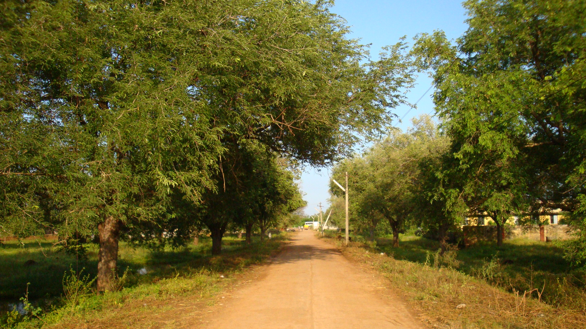 File:TNP village road with Tamarind trees on both sides.JPG ...