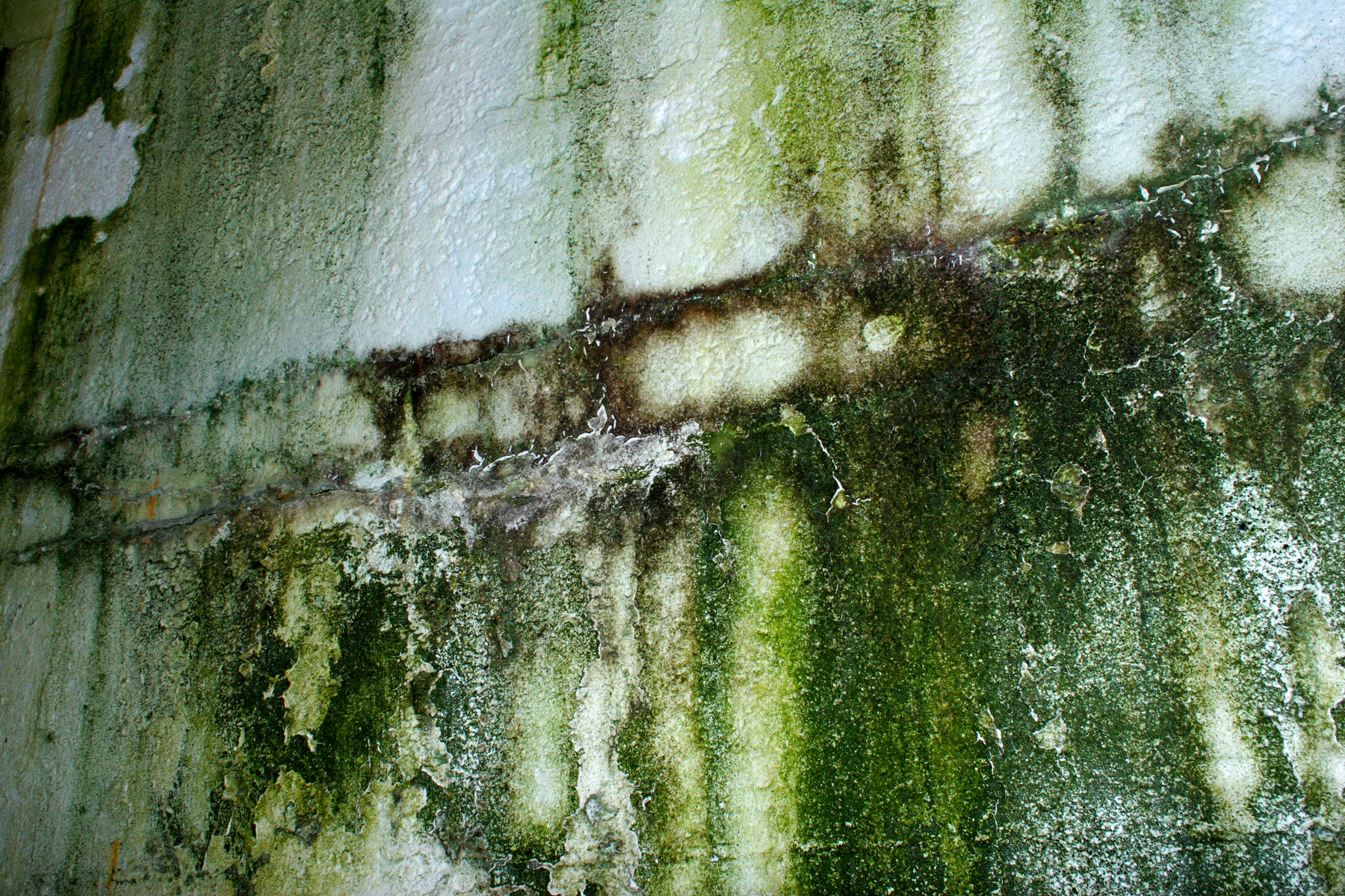 Green wall texture, Angle, Cement, Concrete, Dirty, HQ Photo