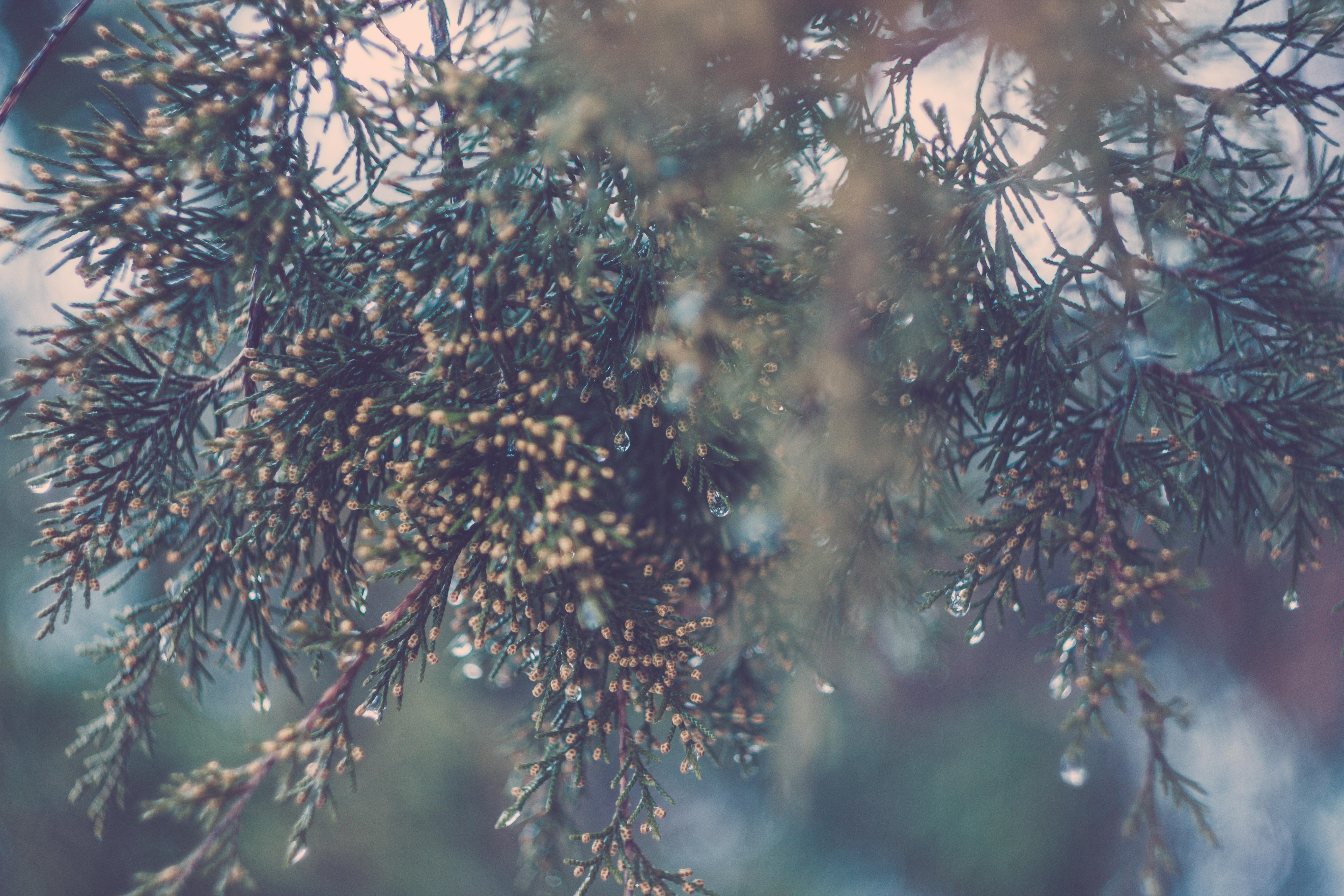 Green White and Yellow Christmas Ornament, Blur, Invertebrate, Tree, Spruce, HQ Photo