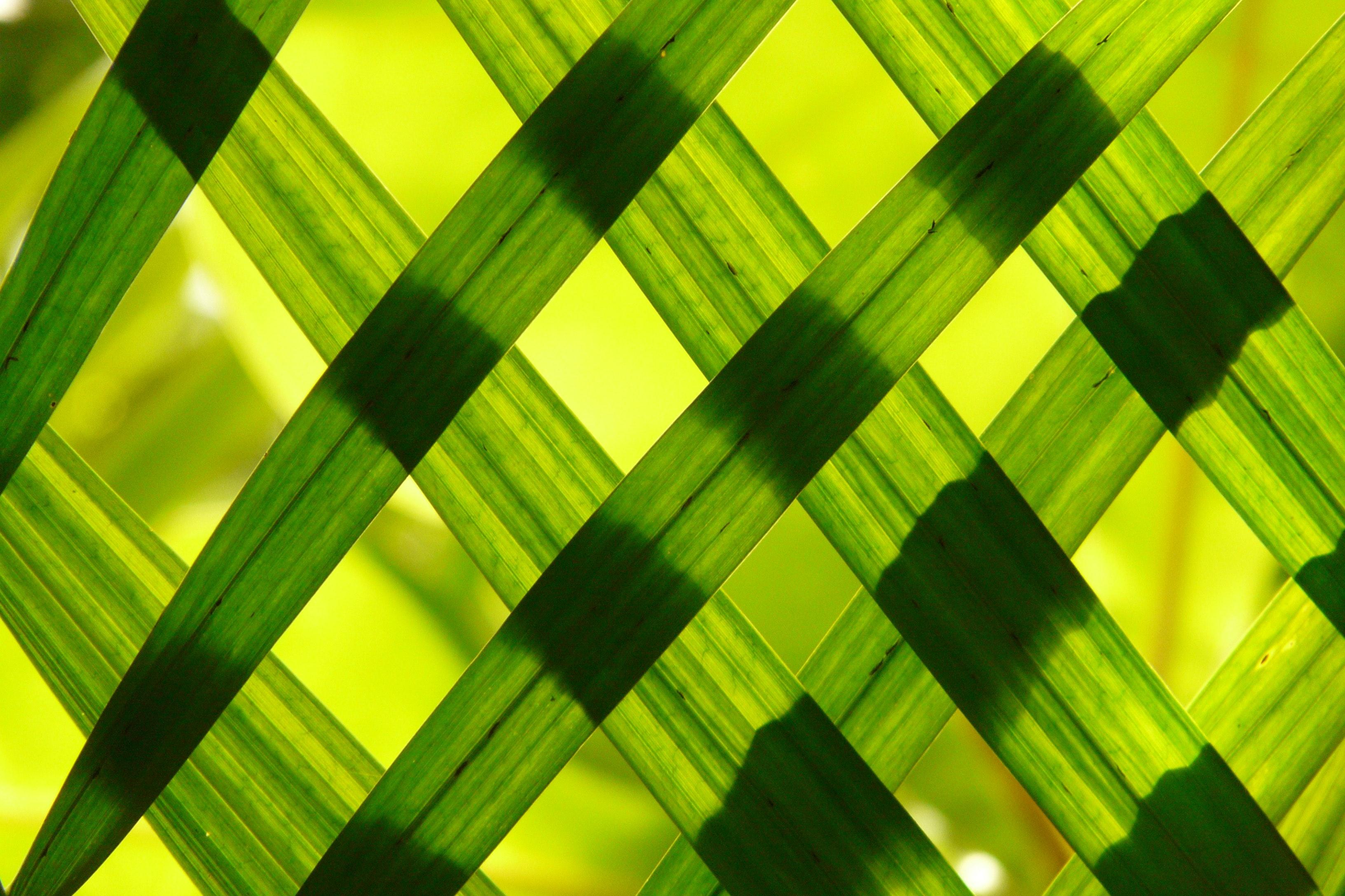 Green woven frame photo