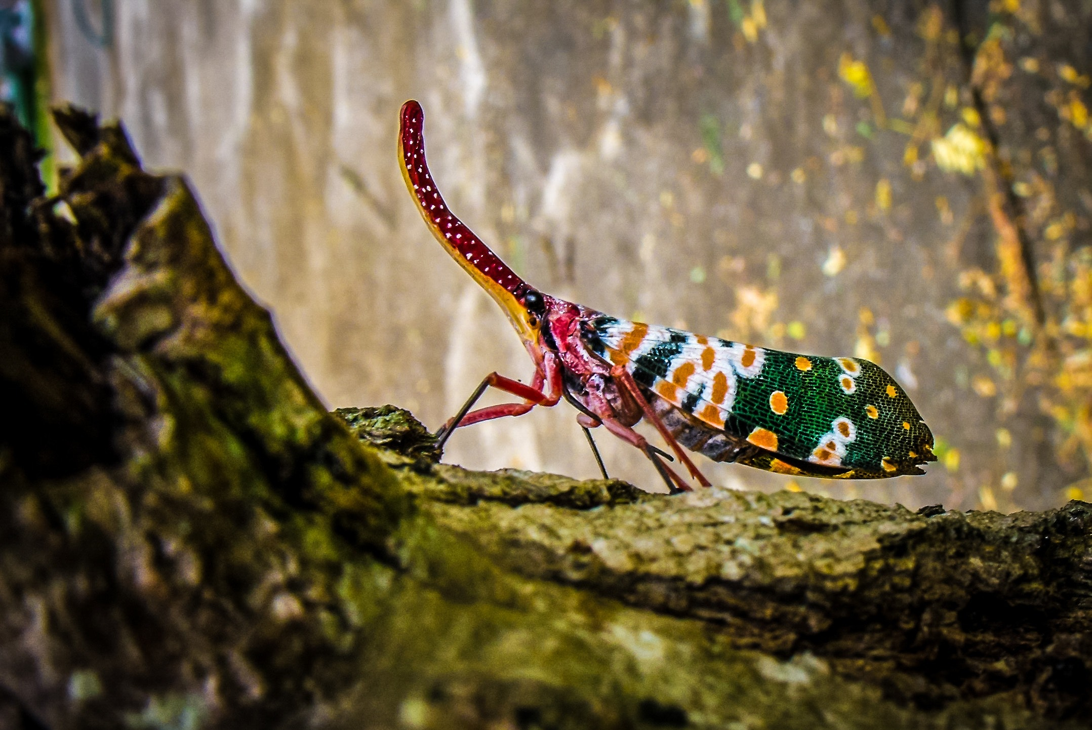 Green yellow and white insect on green tree trunk photo