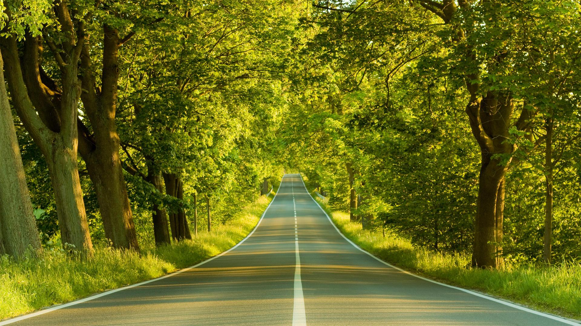 Greenery Road Nature Wallpaper Wallpaper | WallpaperLepi